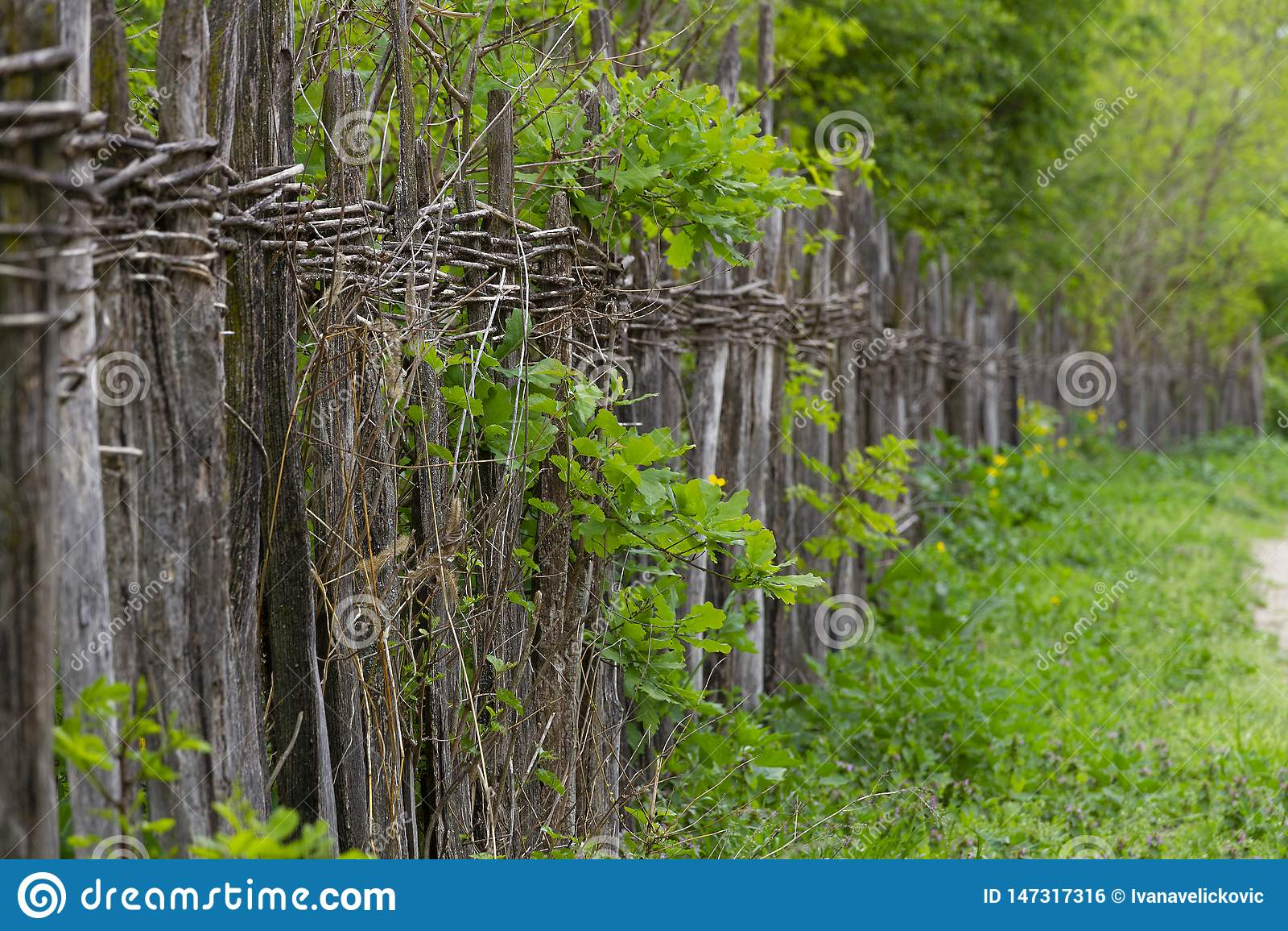 Ψιλός αγροτικός ψάθινος φράκτης παράλληλα με τον αγροτικό δρόμο