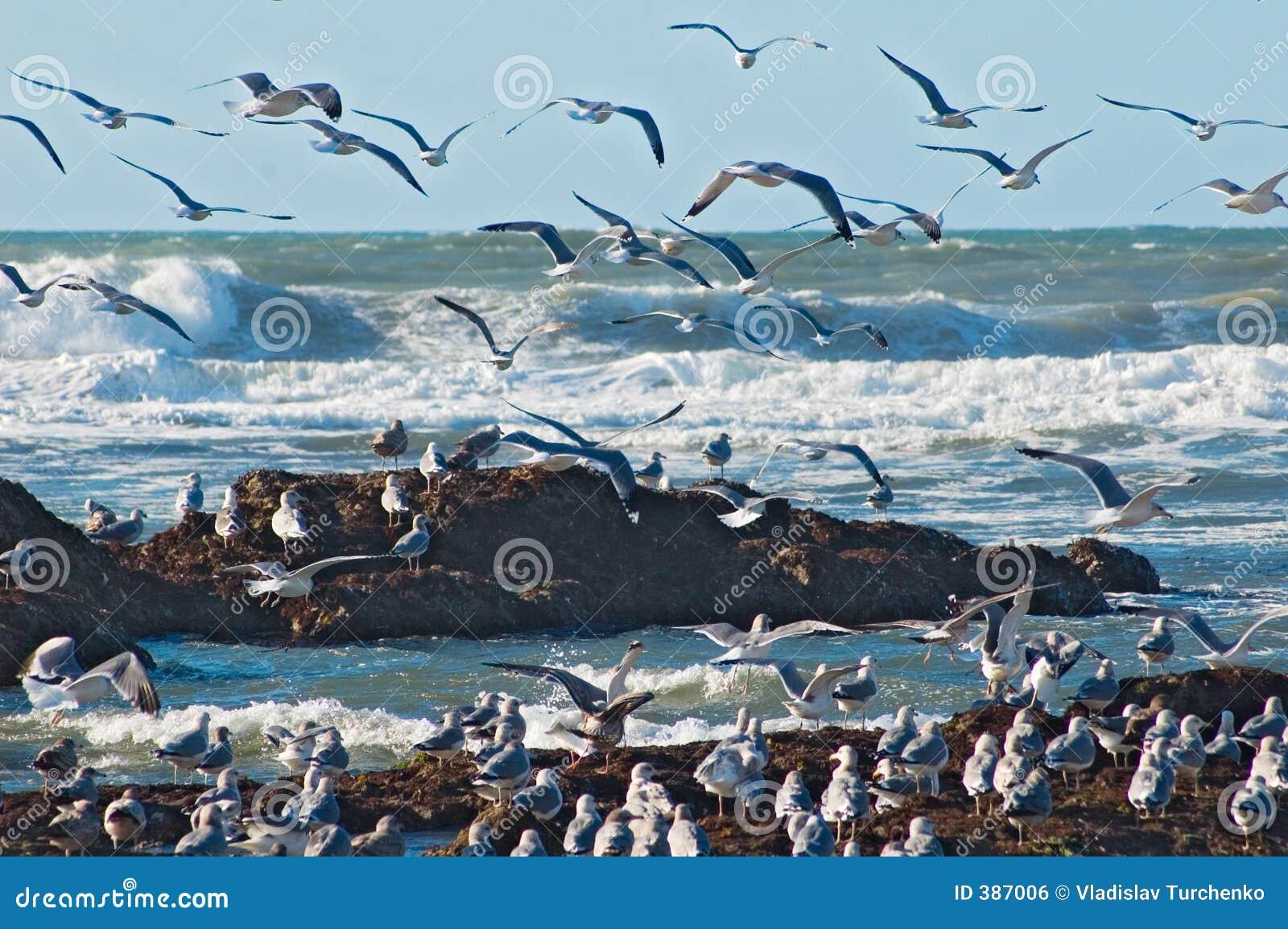 ωκεάνια seagulls κυματωγή