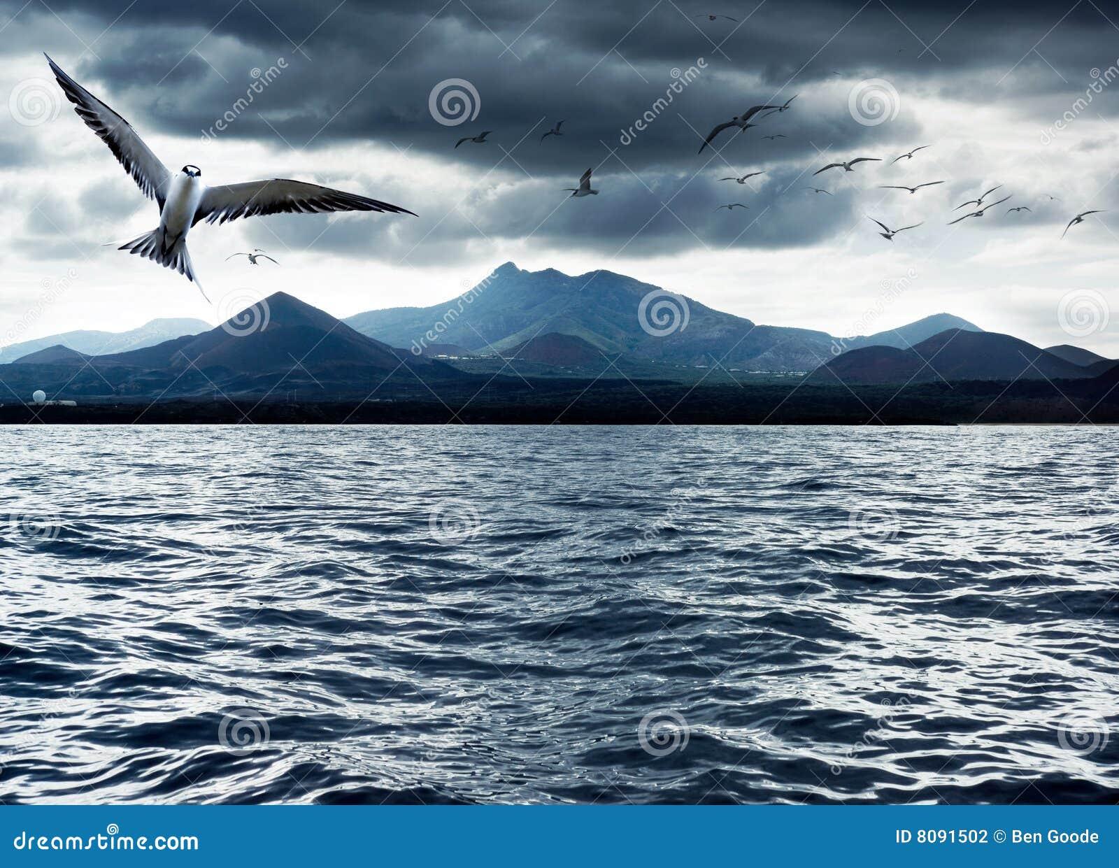 ωκεανός πουλιών