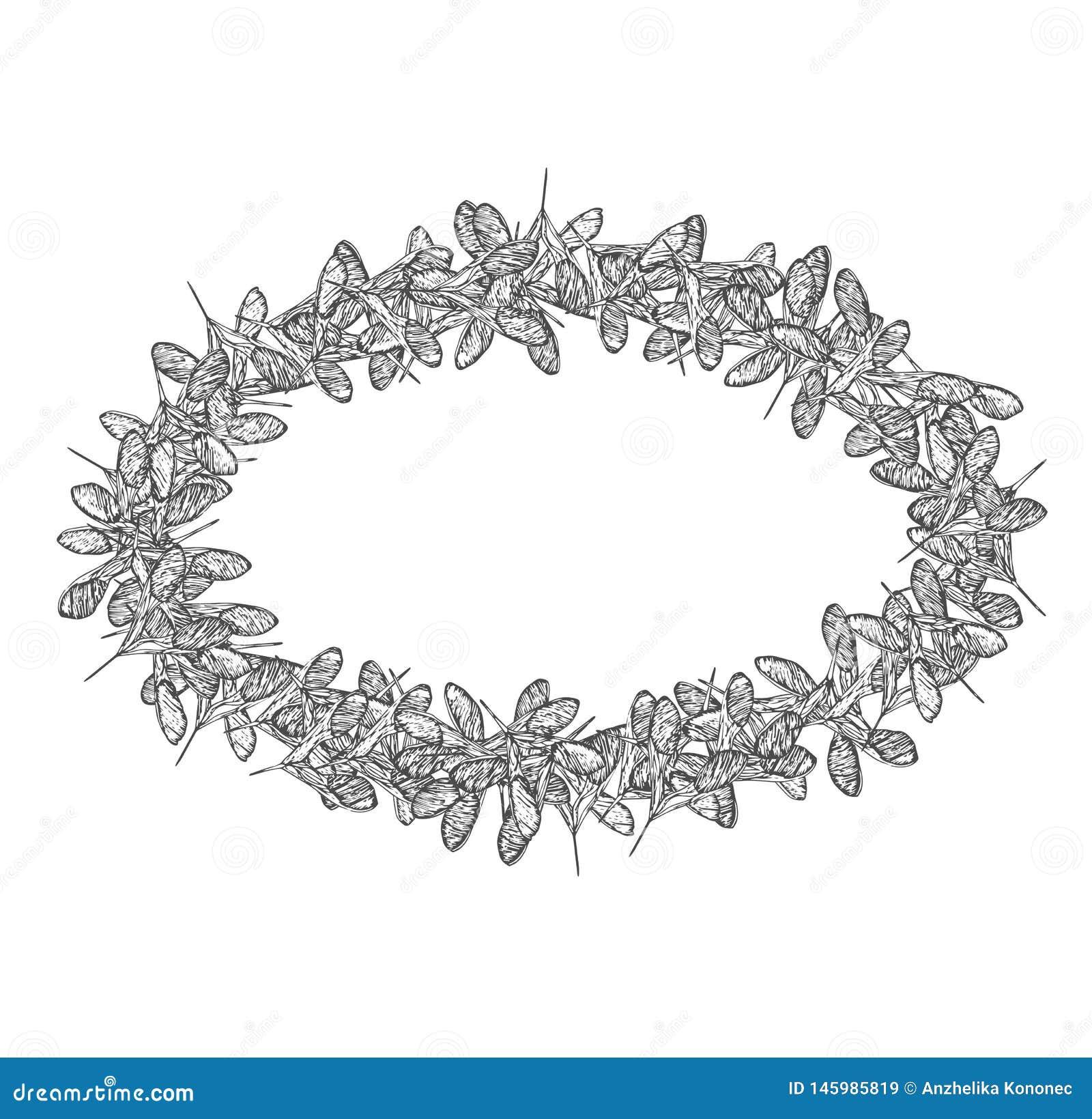 Ωοειδές πλαίσιο σπόρων τριφυλλιού γκρίζο