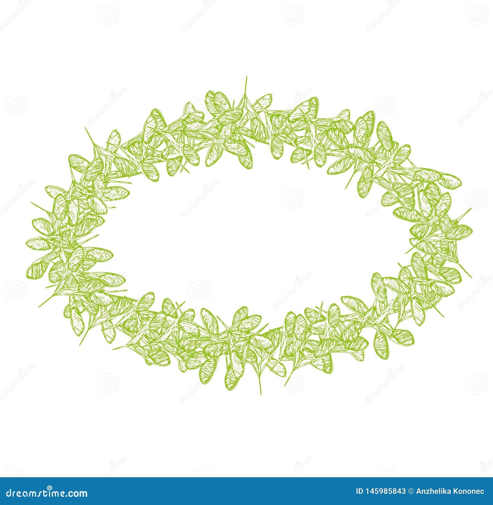 Ωοειδής ασβέστης πλαισίων σπόρων τριφυλλιού