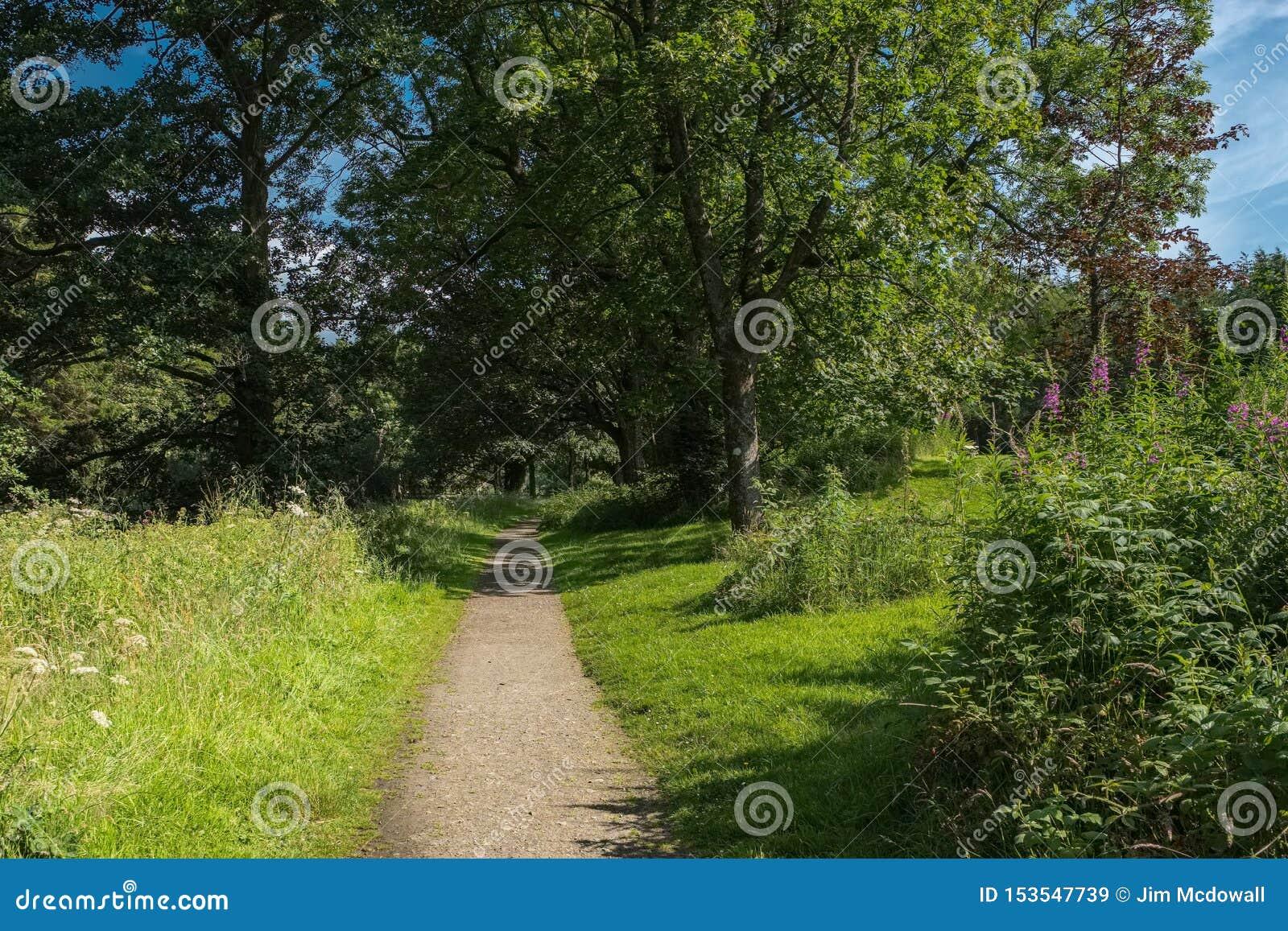 Ωριμάστε τα σκωτσέζικα δέντρα το καλοκαίρι και ένα μονοπάτι που τρέχει μέσω του κέντρου της εικόνας