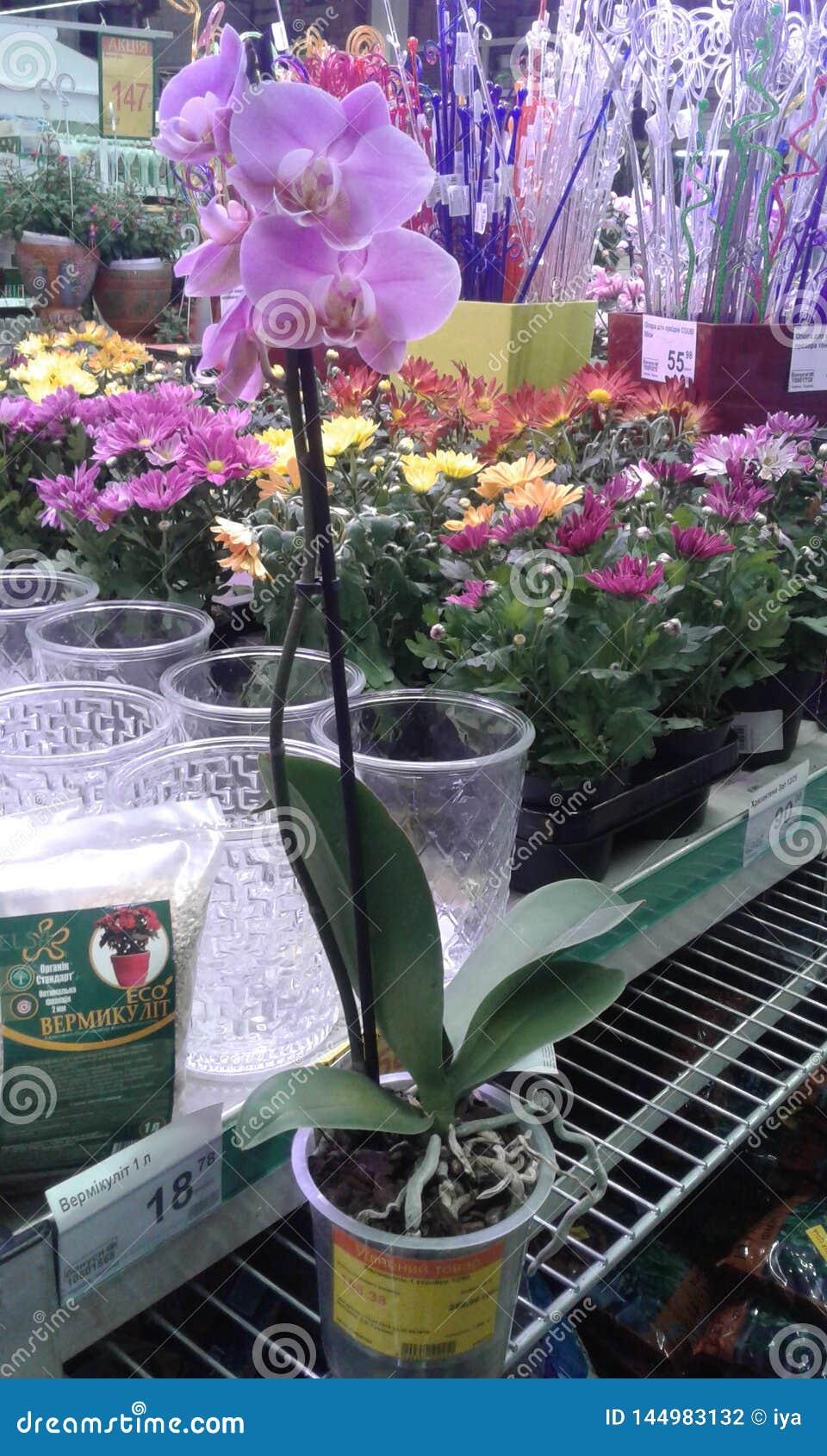 Ορχιδέα λουλουδιών