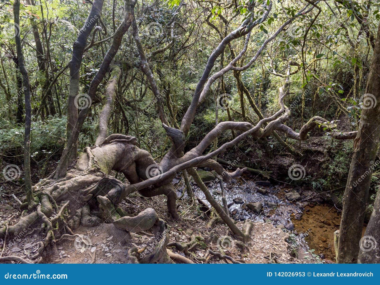 Όμορφα άγρια δέντρα κοντά στη λίμνη στο τροπικό δάσος