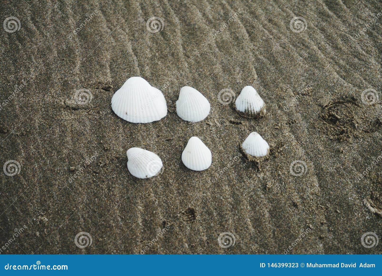 Όμορφα άσπρα κοχύλια στην παραλία