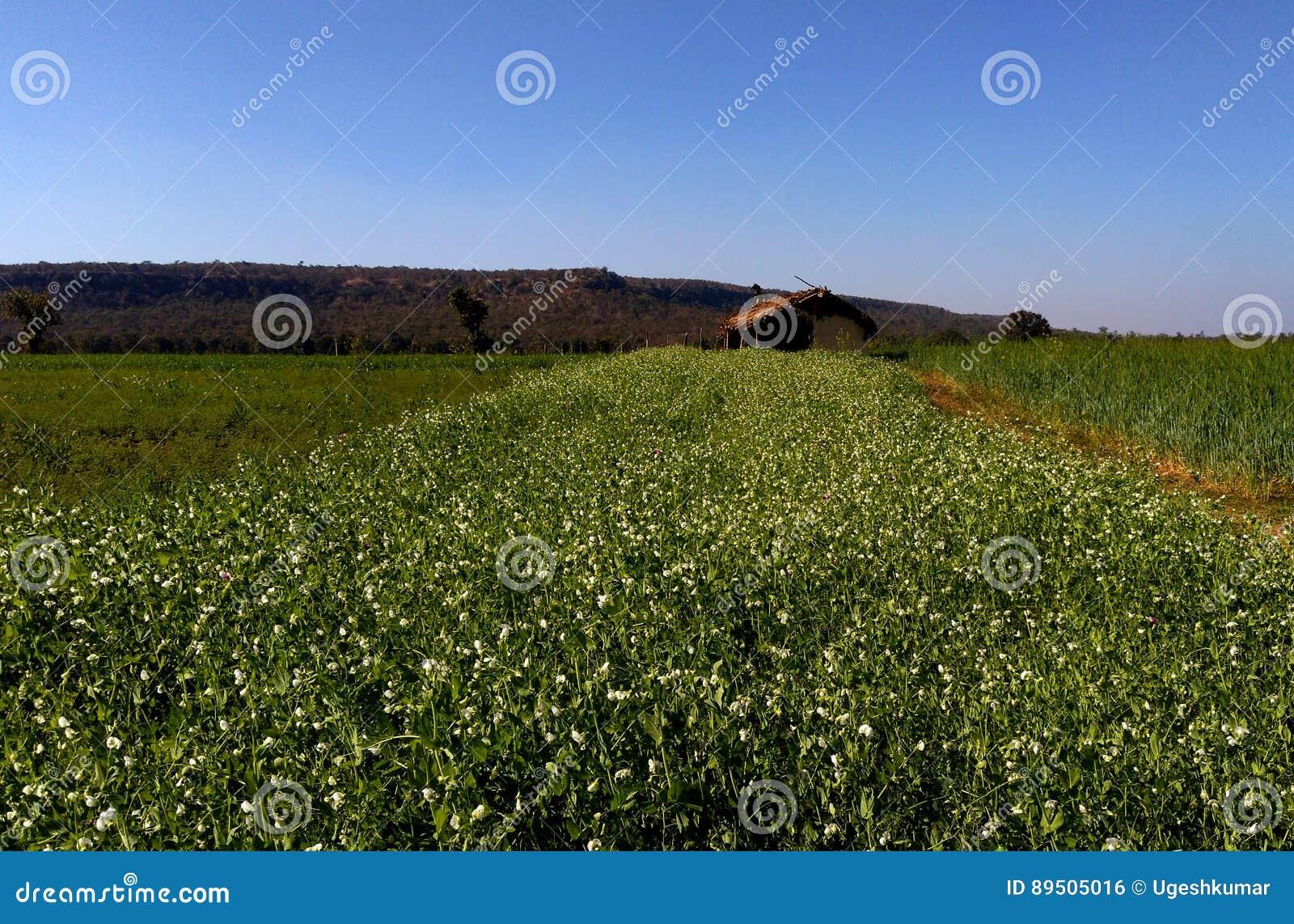 Όμορφα καλλιεργήσιμο έδαφος και τοπίο, samarda, Bhopal, Ινδία