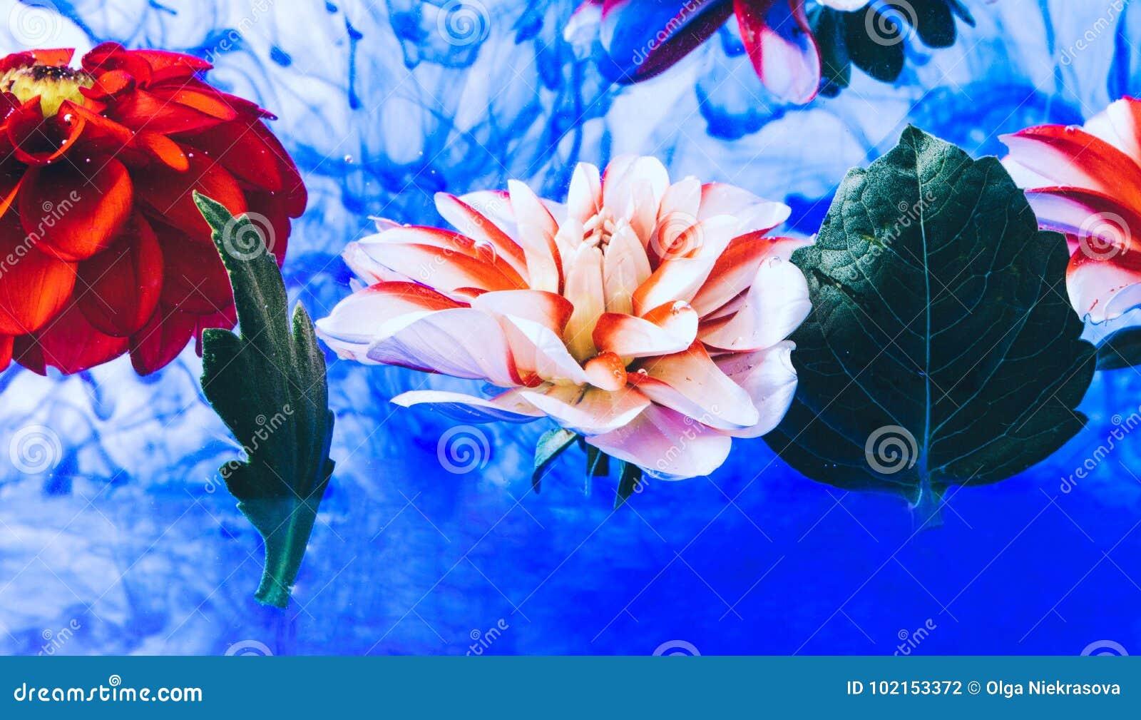 Όμορφα λουλούδια Levitating κάτω από το νερό