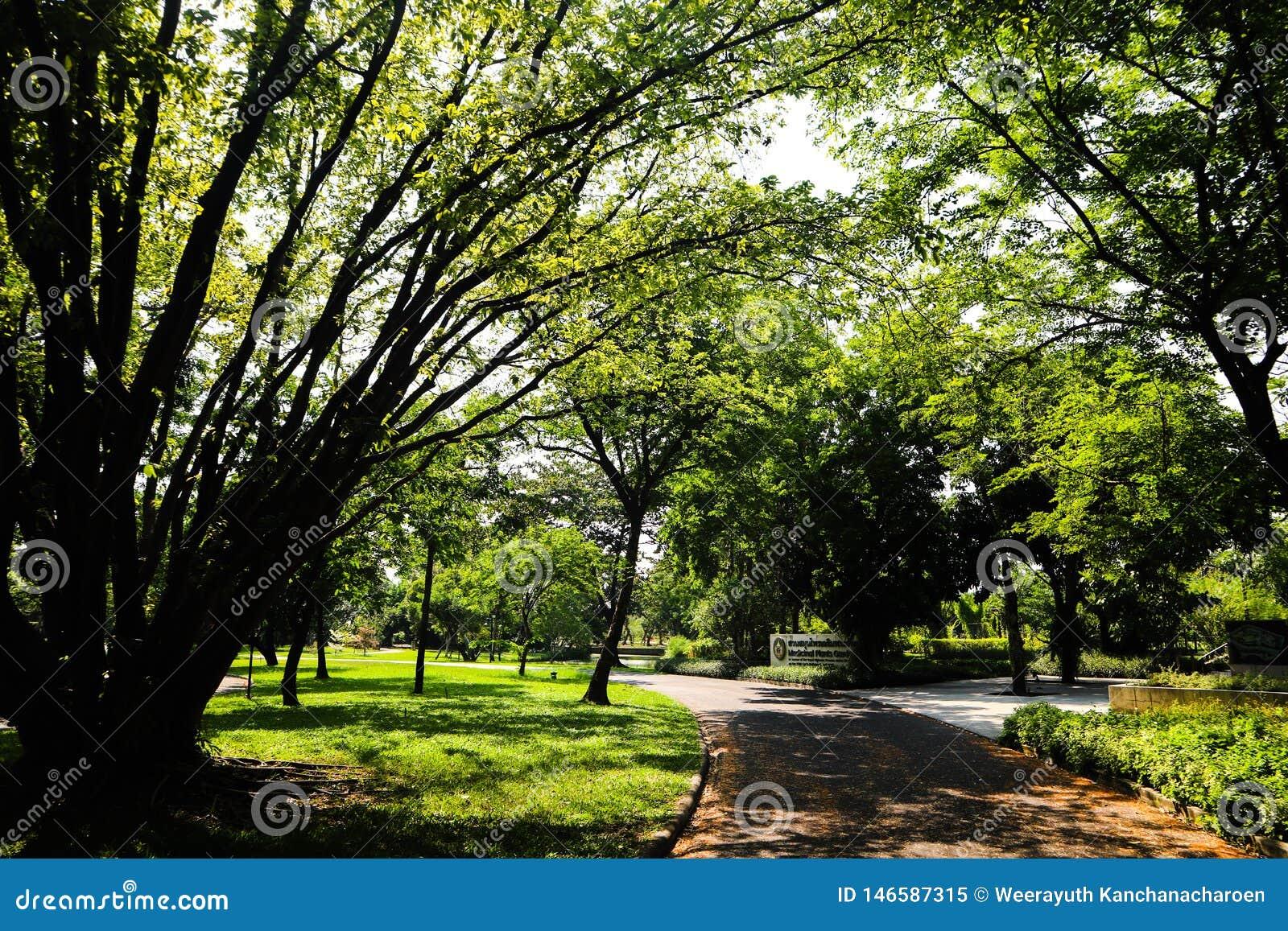 Όμορφα πράσινα δέντρο, εγκαταστάσεις, δάσος και λουλούδια στους υπαίθριους κήπους και τα πάρκα