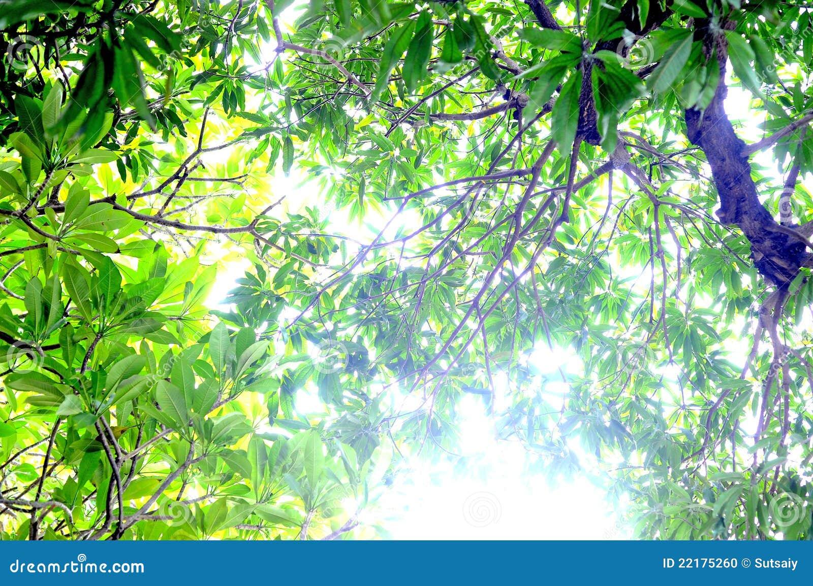 Όμορφα πράσινα φύλλα