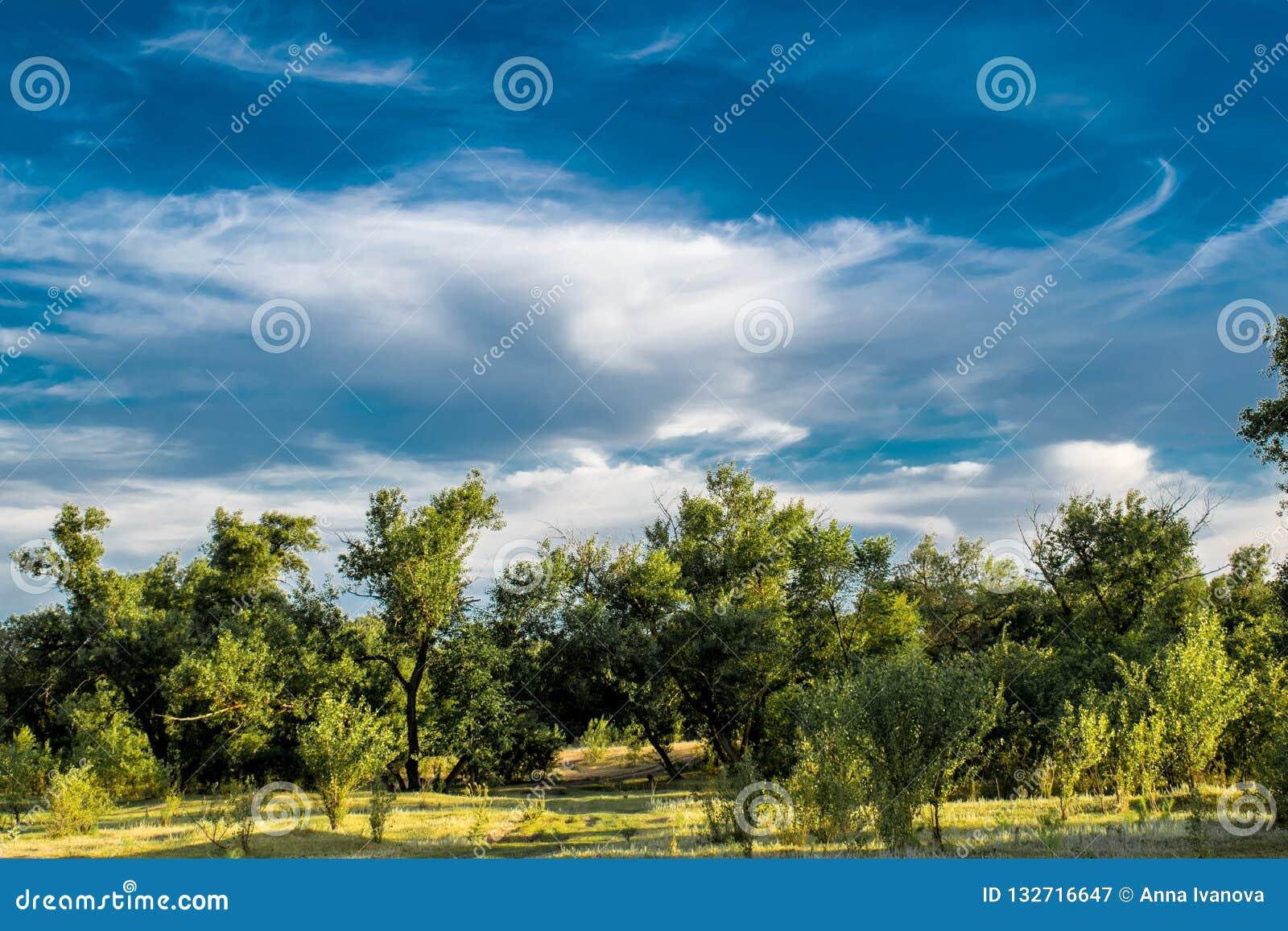 Όμορφα τοπία της Ρωσίας Περιοχή Rostov Ζωηρόχρωμες θέσεις Πράσινοι βλάστηση και ποταμοί με τις λίμνες και τα έλη Δάση και mea