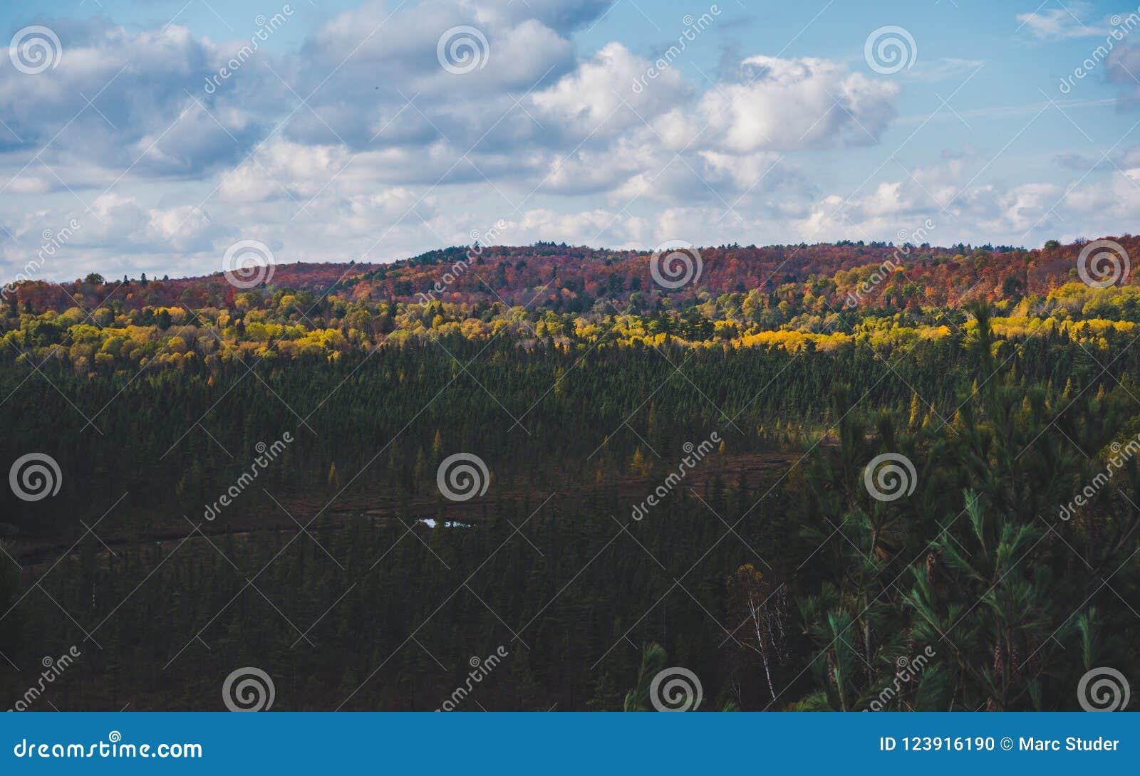 Όμορφη άποψη πέρα από το χαρακτηριστικό καναδικό τοπίο επαρχίας με το ζωηρόχρωμο δάσος φθινοπώρου Algonquin στο πάρκο, Καναδάς