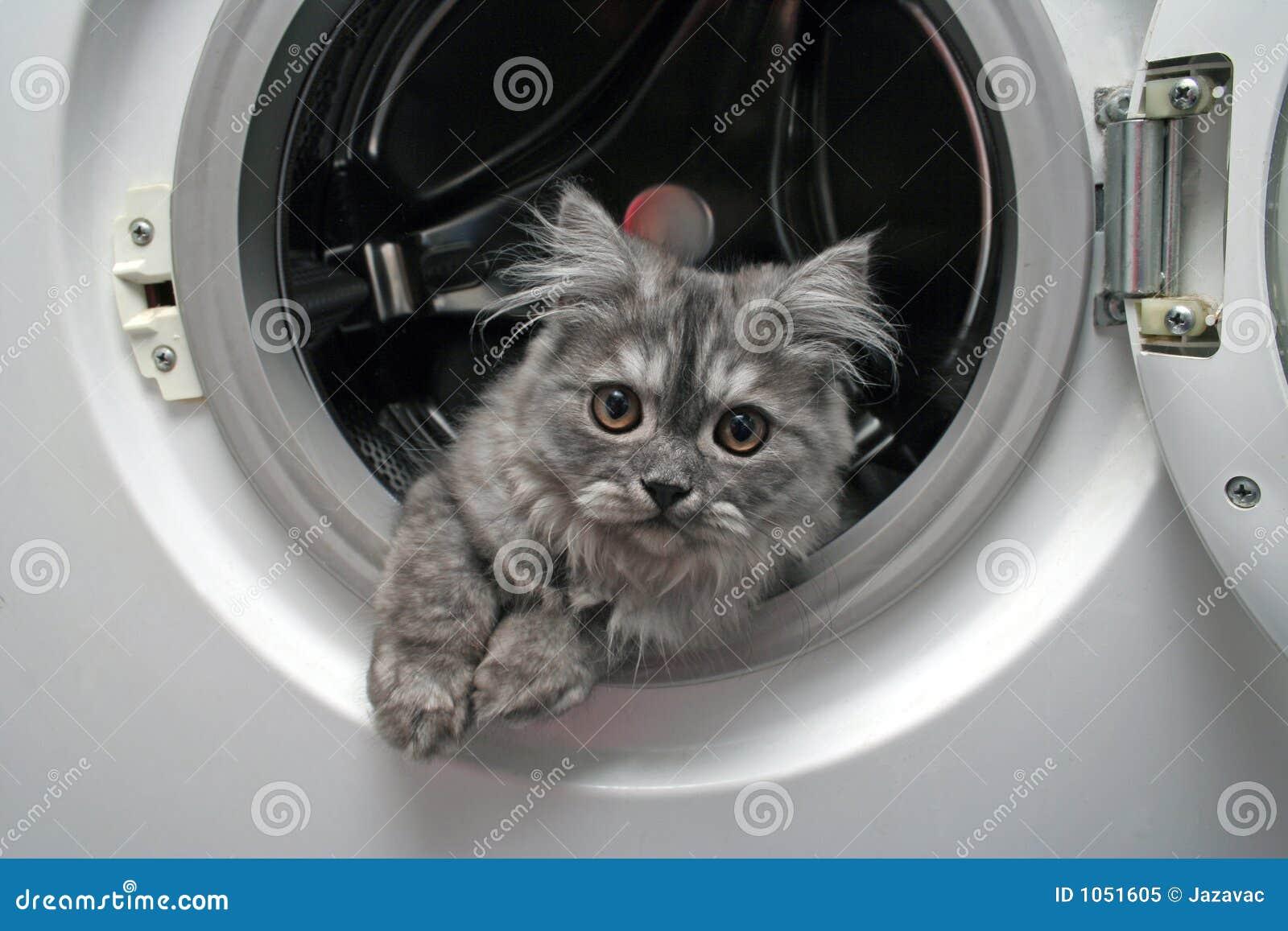 όμορφη γάτα