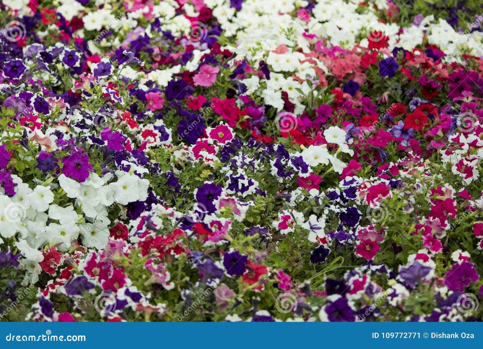 Όμορφη δέσμη των ζωηρόχρωμων λουλουδιών σε έναν κήπο