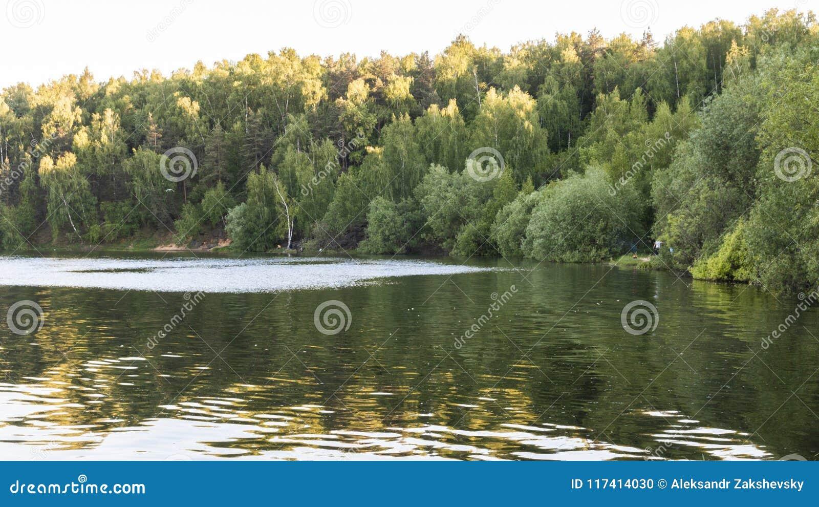 Όμορφη δασική λίμνη και πράσινα δέντρα