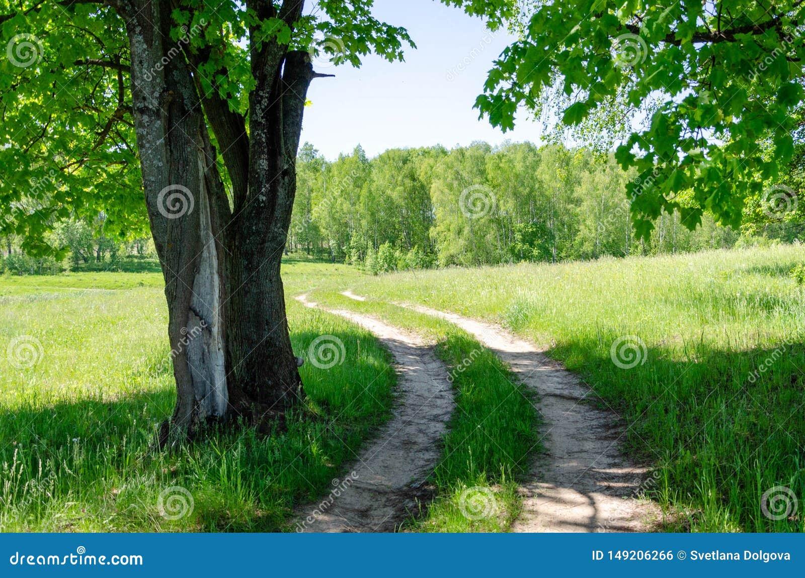 Όμορφη εθνική οδός στο δάσος