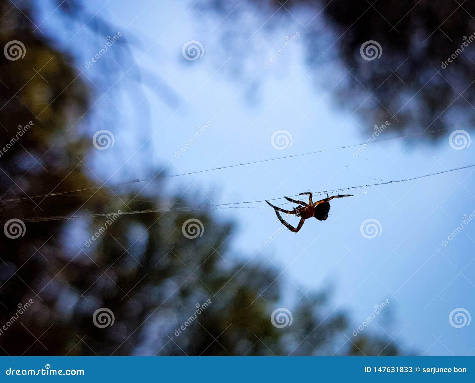 Όμορφη εικόνα στην οποία μπορείτε να δείτε μια αράχνη μέσω του κέντρου της εικόνας σε ένα οριζόντιο νήμα που το κρατά