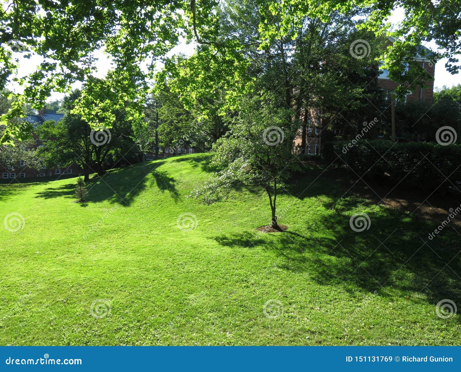 Όμορφη θερινή πράσινη χλόη στη γειτονιά