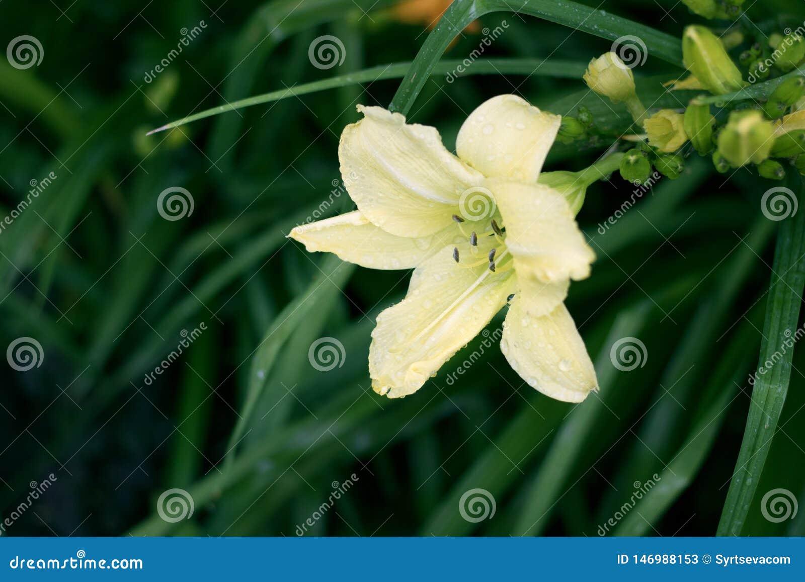 Όμορφη κίτρινη κινηματογράφηση σε πρώτο πλάνο λουλουδιών στο πράσινο υπόβαθρο κάρδων