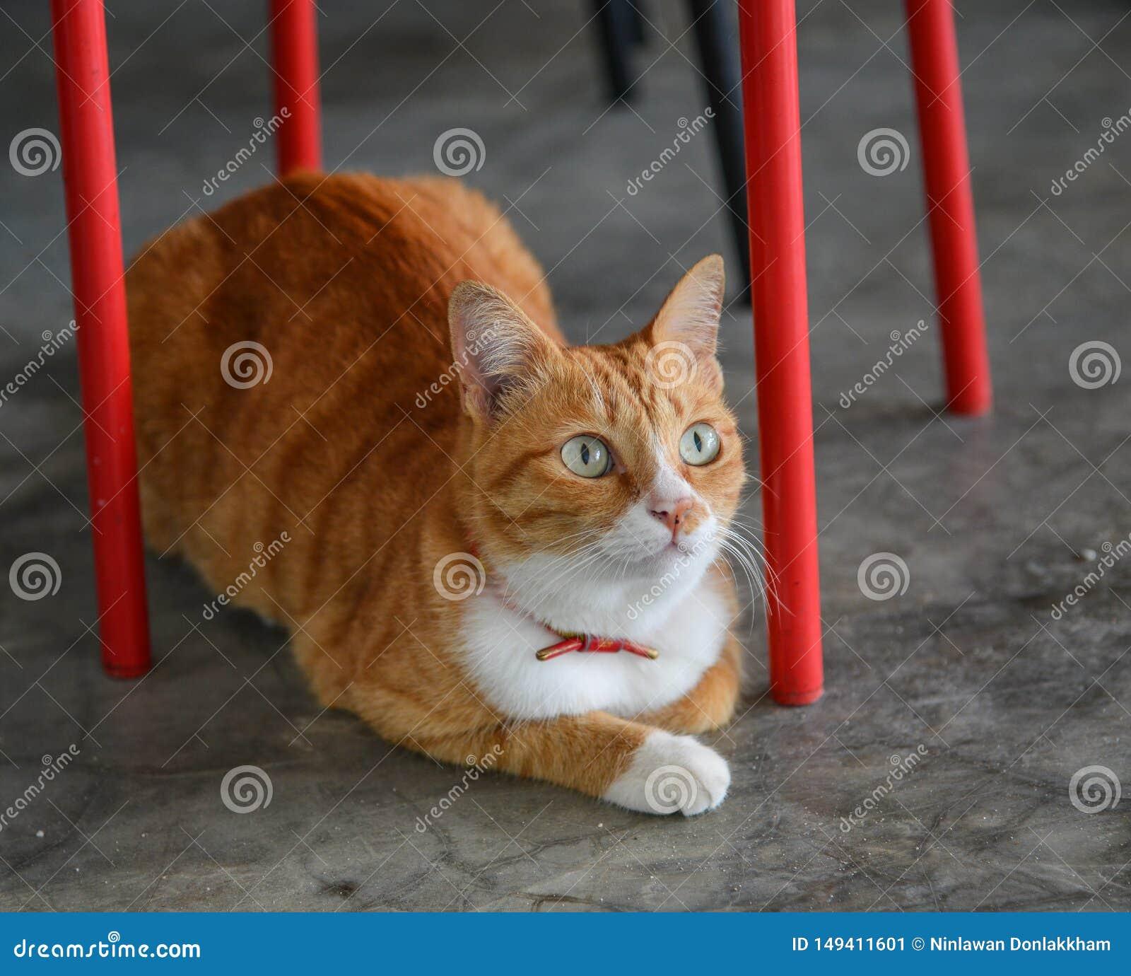 Όμορφη καφετιά γάτα