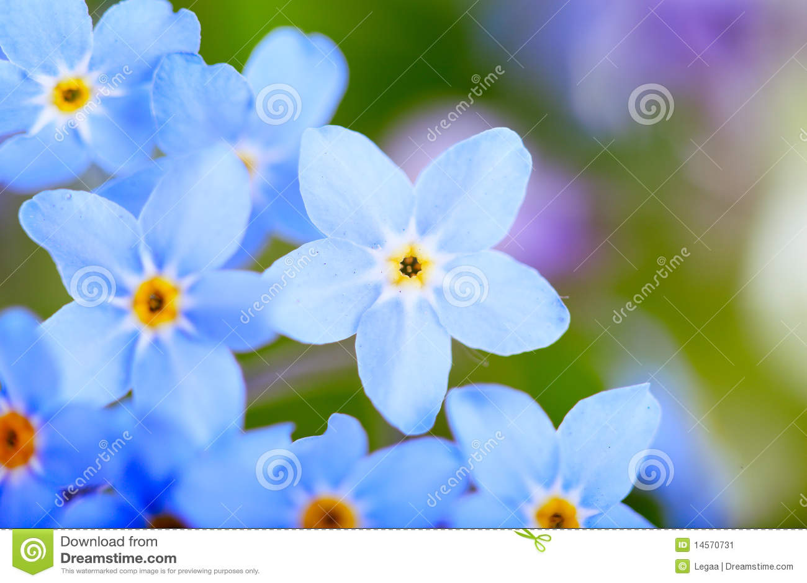 όμορφη μπλε μακροεντολή &lamb