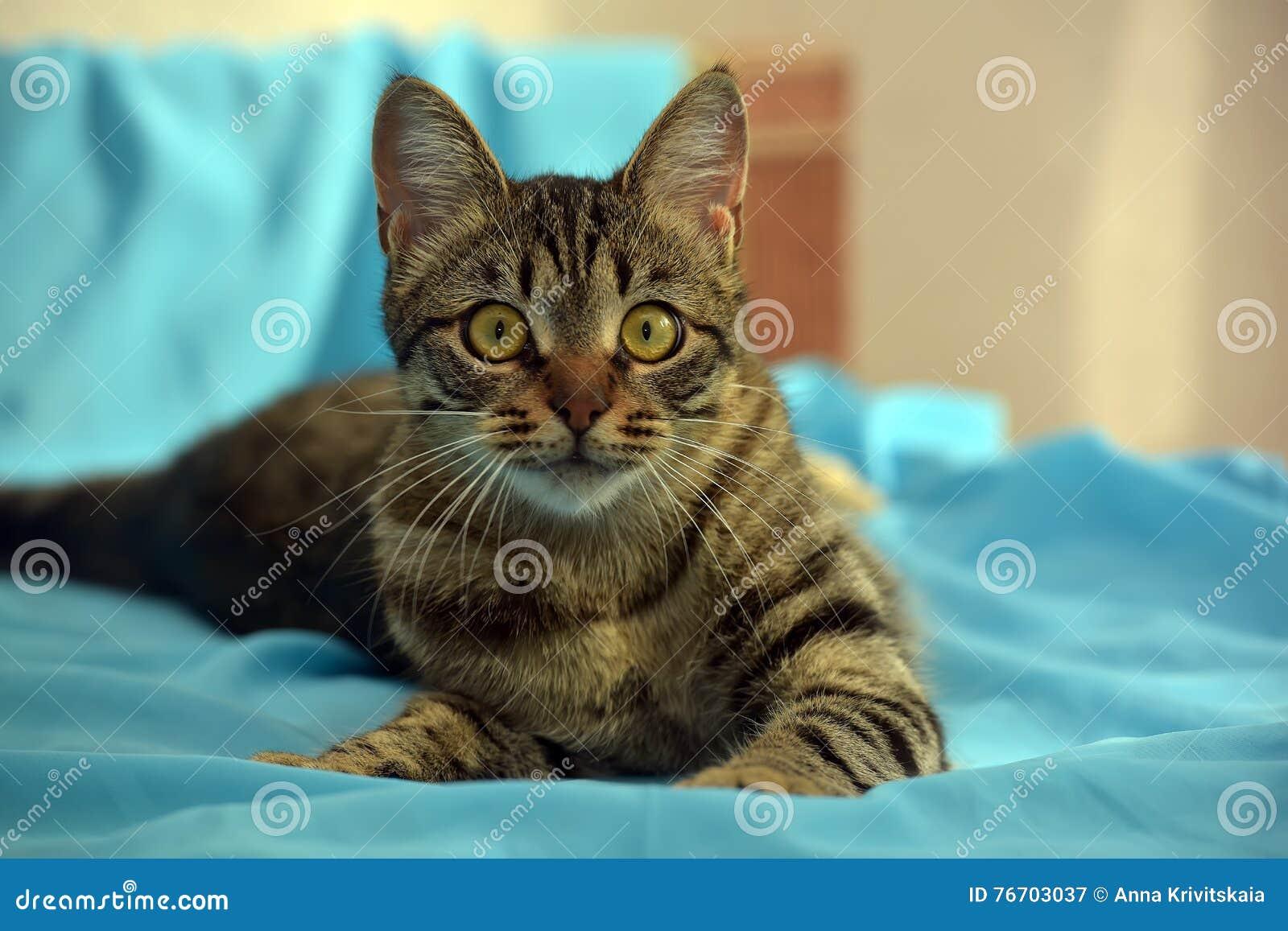 Όμορφη νέα τιγρέ γάτα