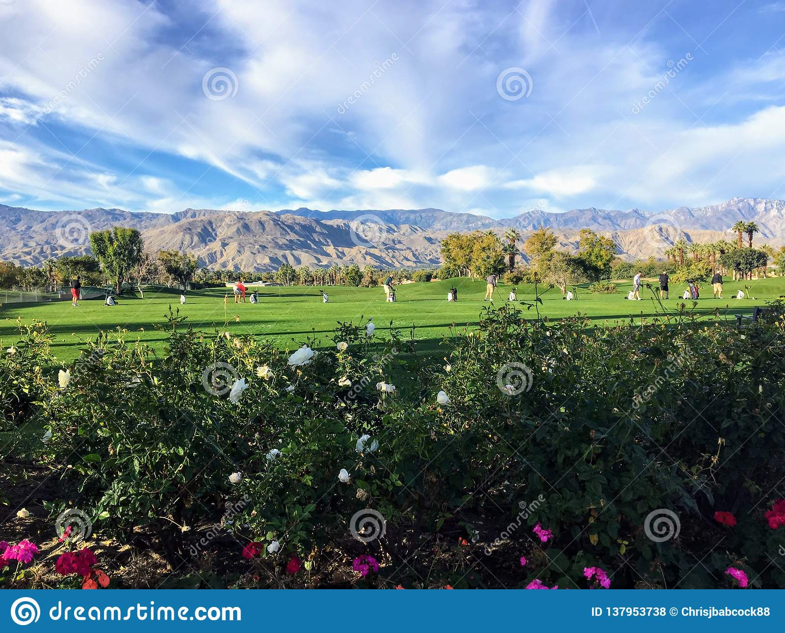 Όμορφη οδηγώντας σειρά χλόης στο Παλμ Σπρινγκς, Καλιφόρνια, Ηνωμένες Πολιτείες Η σειρά είναι χλόη με τα λουλούδια στο πρώτο πλάνο