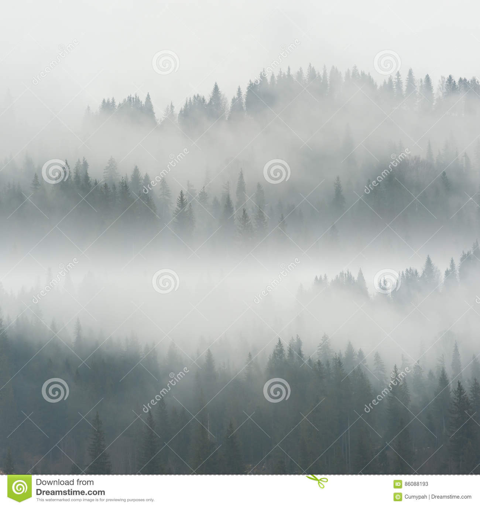 Όμορφη ομίχλη στο δάσος