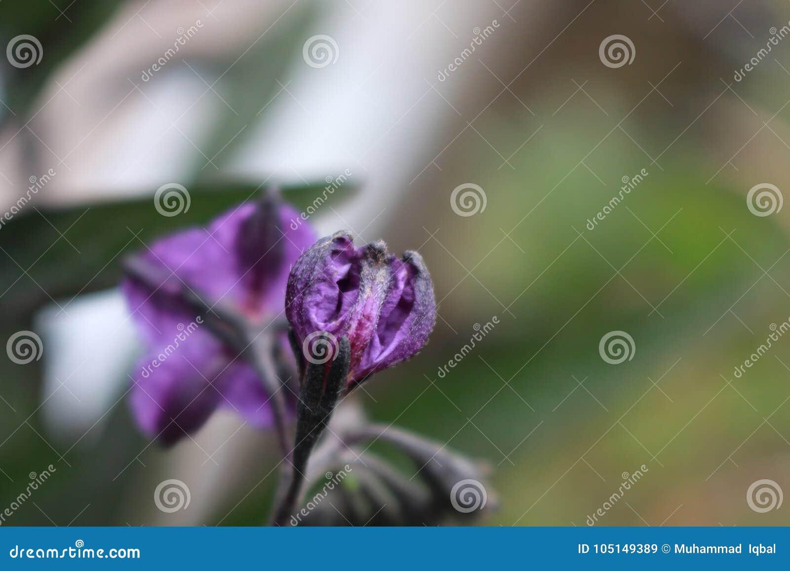 όμορφη πορφύρα λουλουδιών