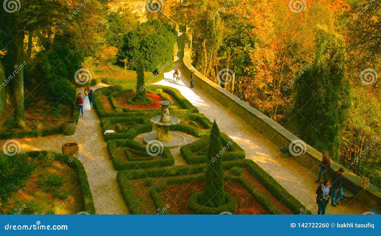 Όμορφη ρομαντική αλέα σε ένα πάρκο με τα ζωηρόχρωμα δέντρα και το φως του ήλιου υπόβαθρο φύσης φθινοπώρου - Bilder