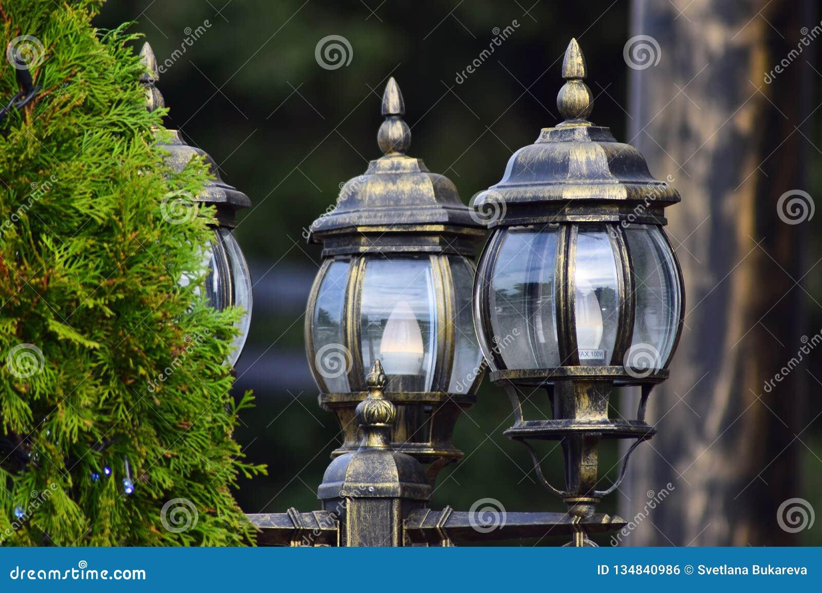 Όμορφοι φωτεινοί σηματοδότες φιαγμένοι από γυαλί δίπλα σε ένα δέντρο πεύκων