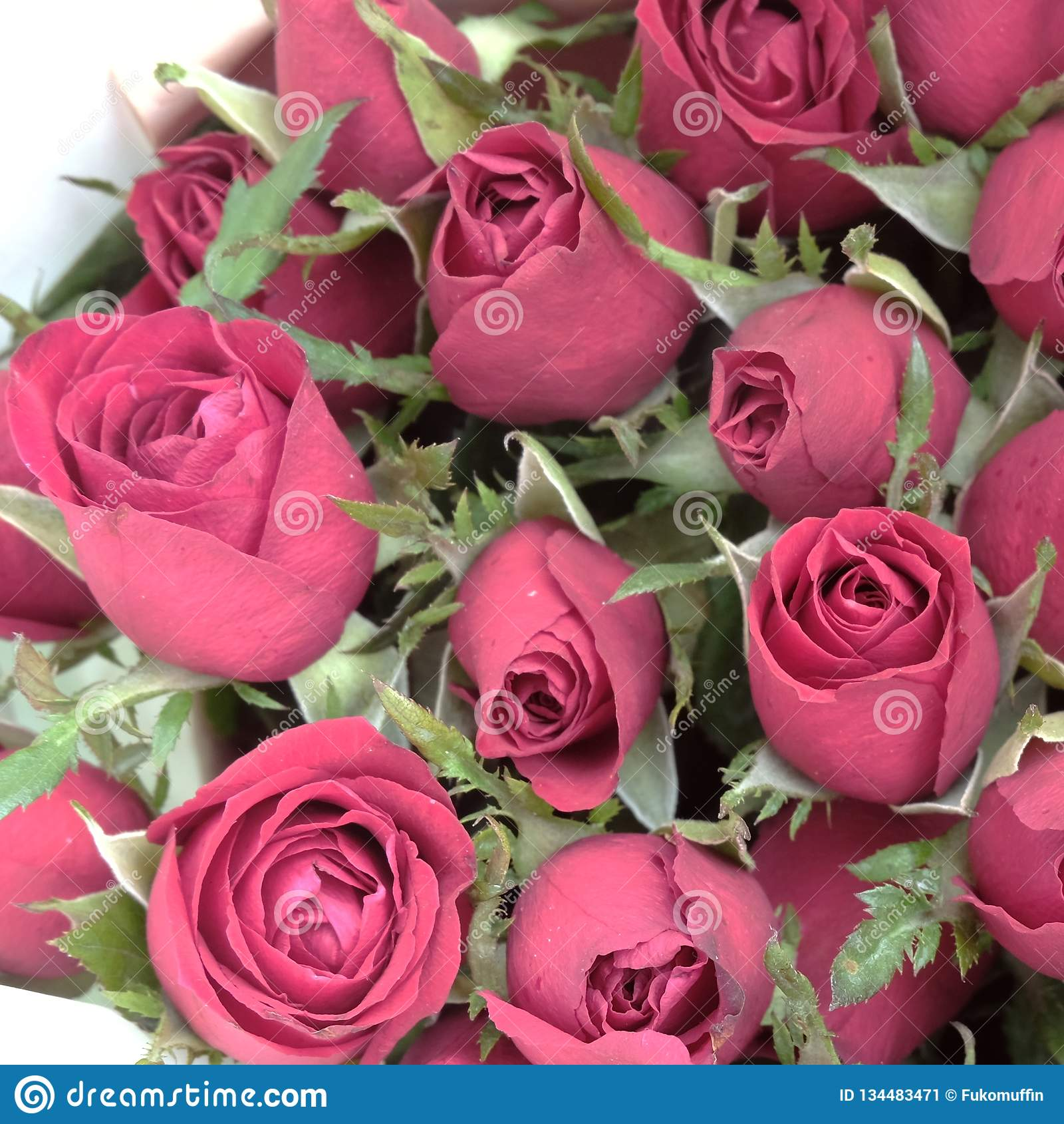Όμορφος ένας κόκκινος αυξήθηκε ανθοδέσμη Κλείστε αυξημένος για valentine' υπόβαθρο ημέρας του s