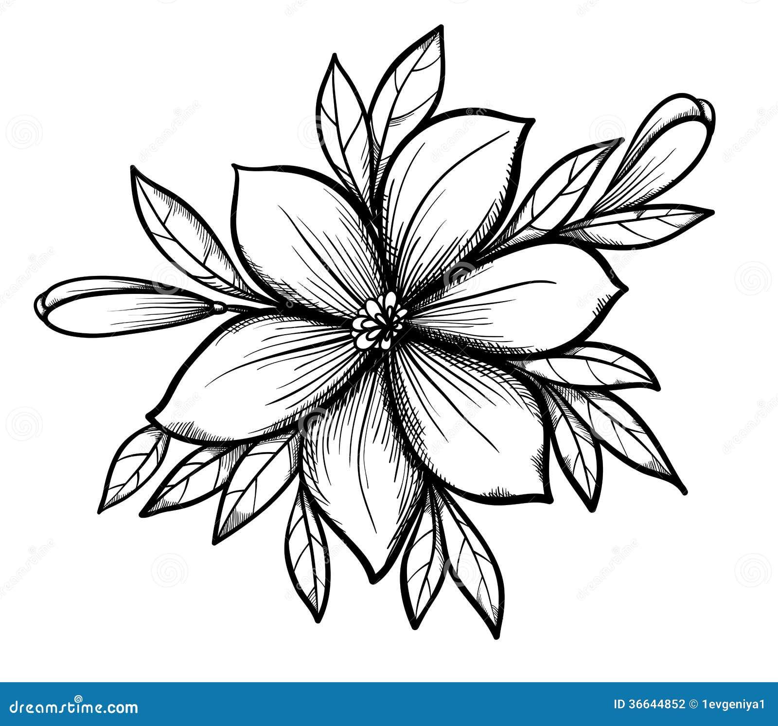 Όμορφος γραφικός κλάδος κρίνων σχεδίων με τα φύλλα και τους οφθαλμούς των λουλουδιών.