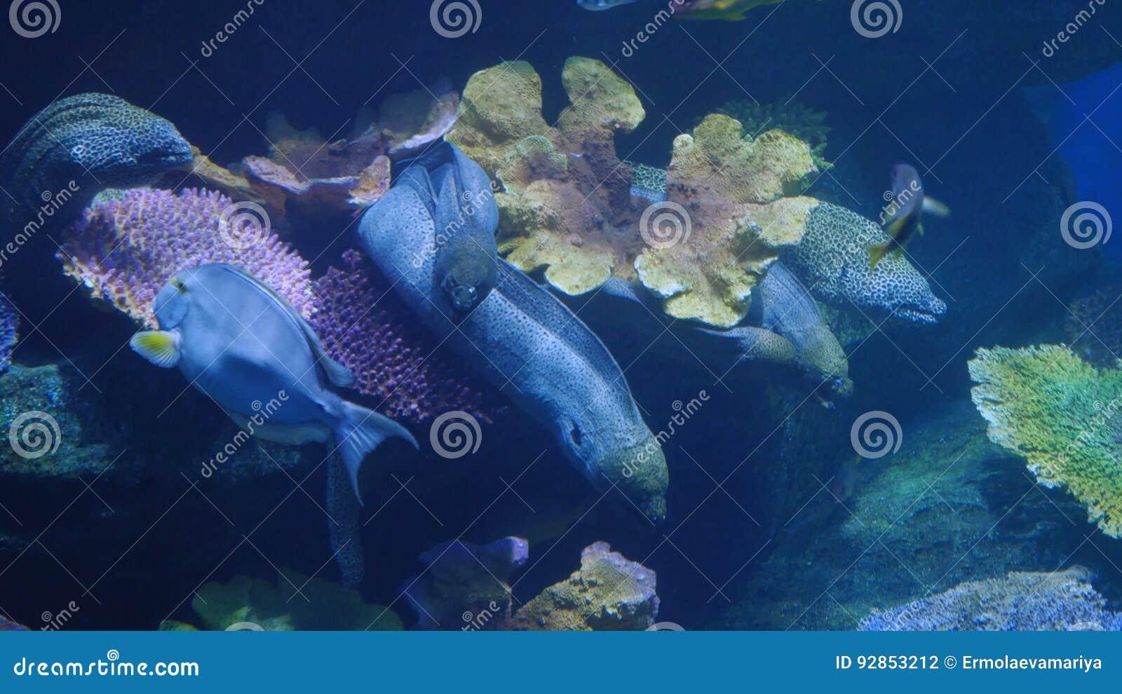 Όμορφος εξωτικός βλέπει τα ψάρια σε ένα ενυδρείο σκηνή υποβρύχια