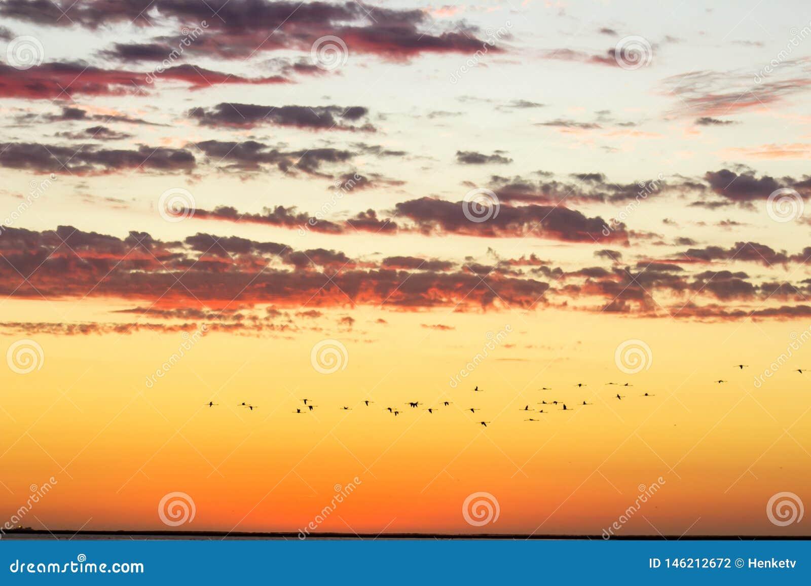 Όμορφος χρυσός νεφελώδης ουρανός τοπίου ηλιοβασιλέματος και πετώντας πουλιά