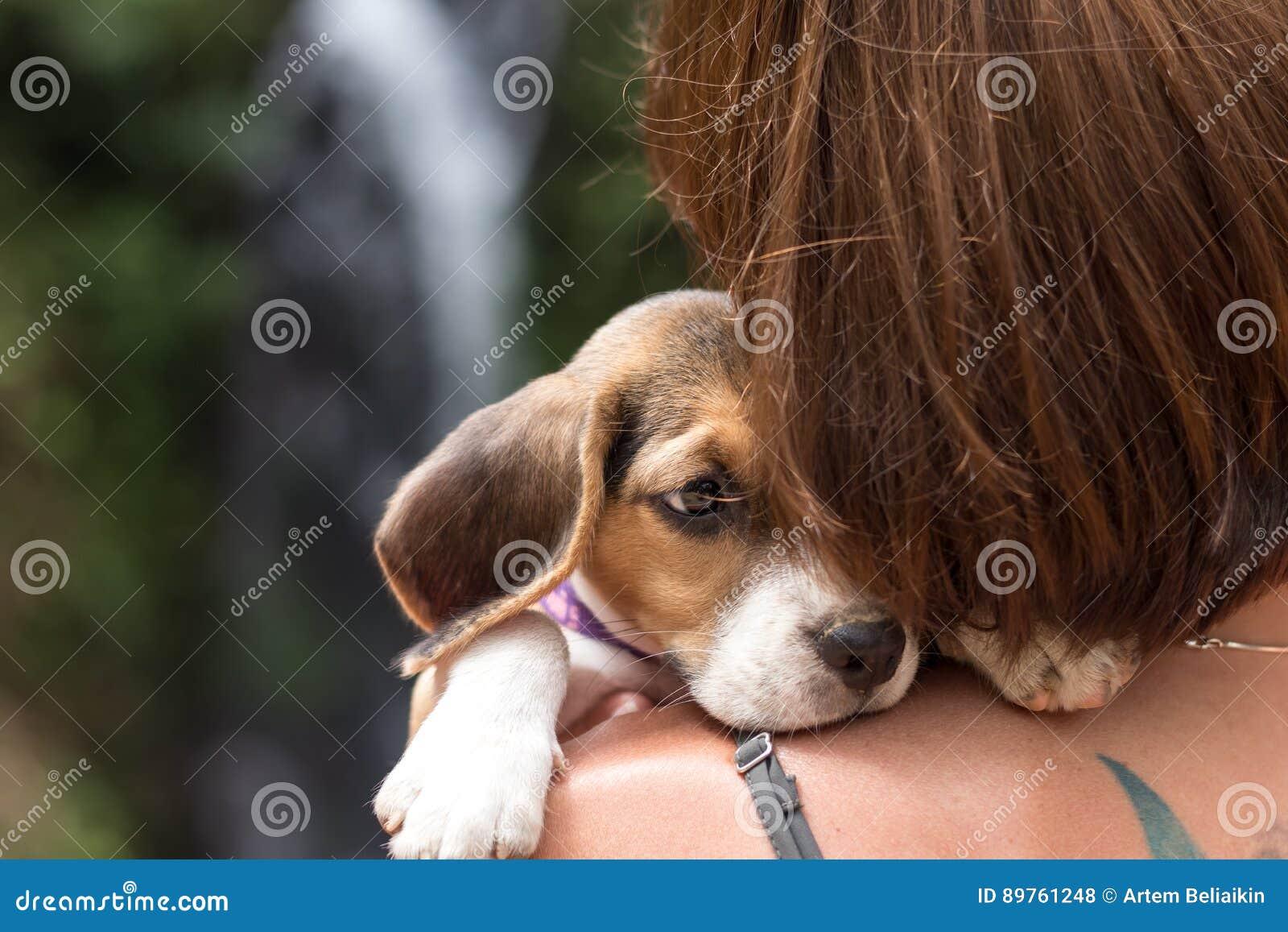 Όμορφος όμορφος νέος ευχαριστημένος γυναικών από το μικρό λαγωνικό κουταβιών σκυλιών Τροπικό νησί Μπαλί, Ινδονησία Κυρία με το λα