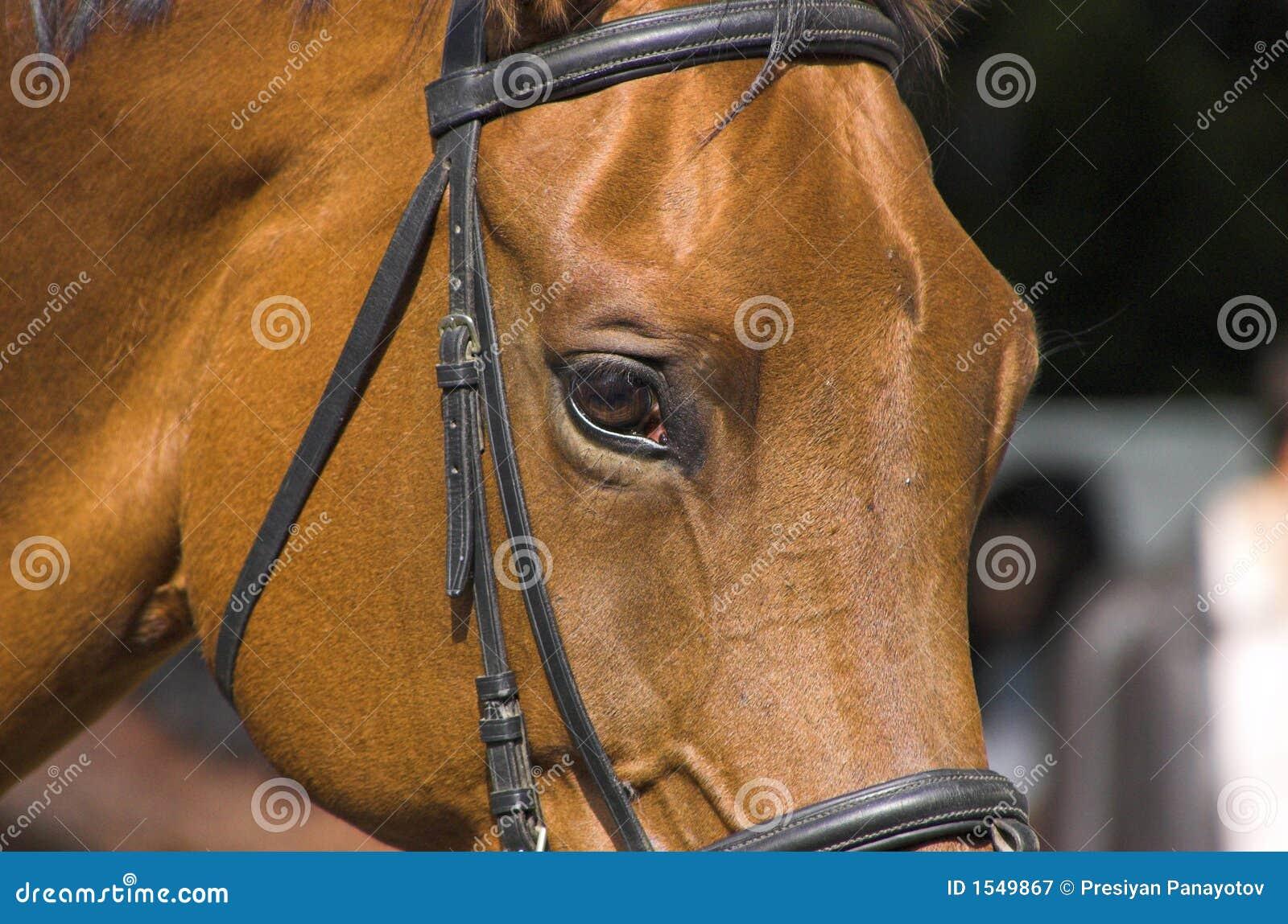 όμορφο άλογο