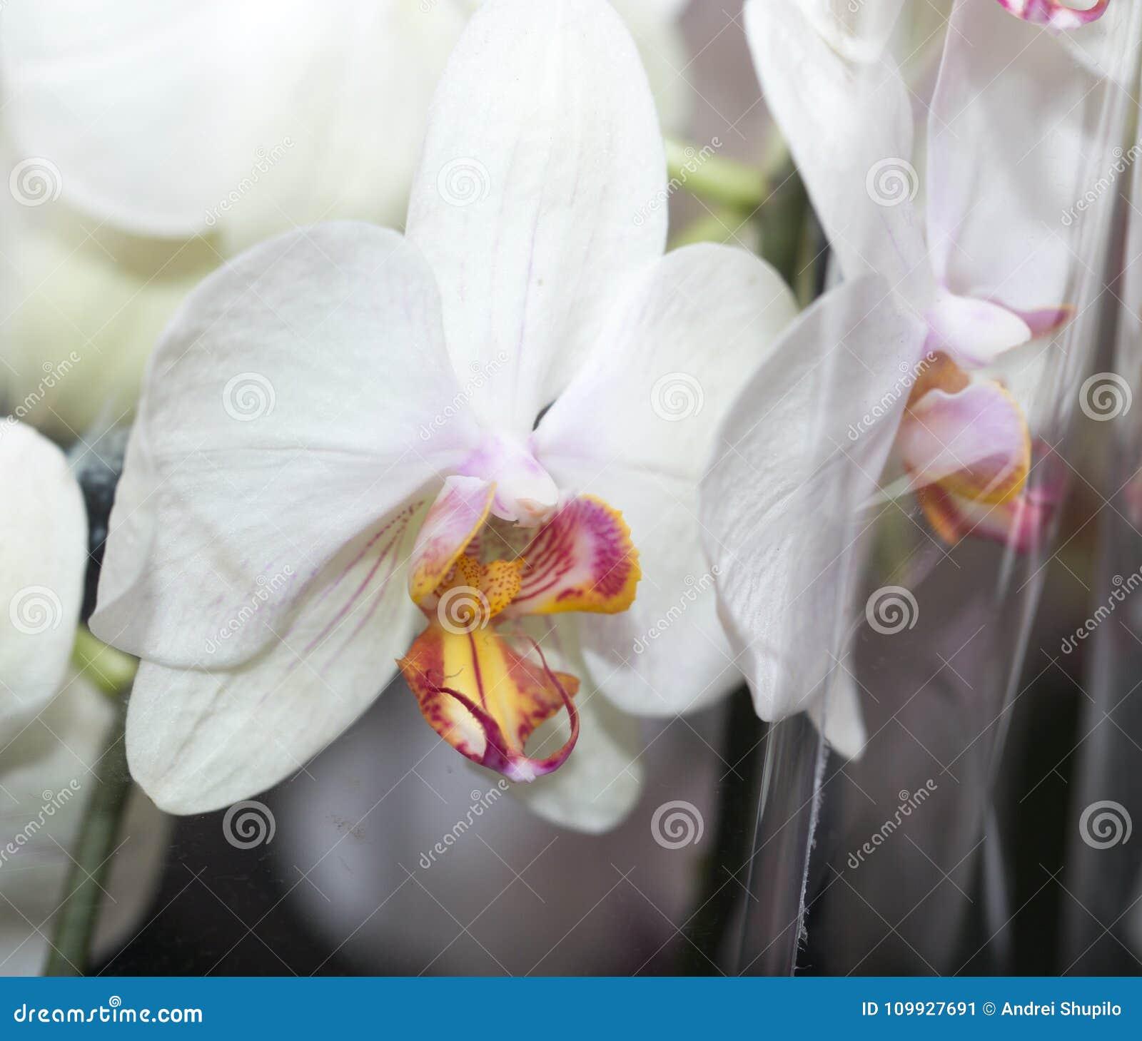 Όμορφο άσπρο λουλούδι