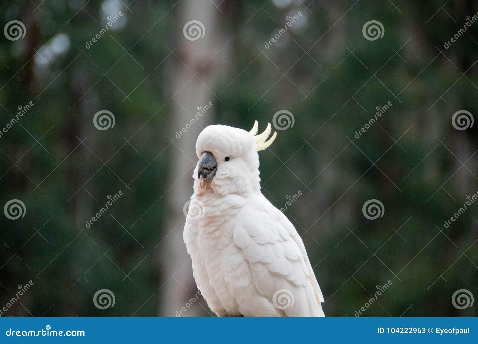 δωρεάν μεγάλο πουλί εικόνες