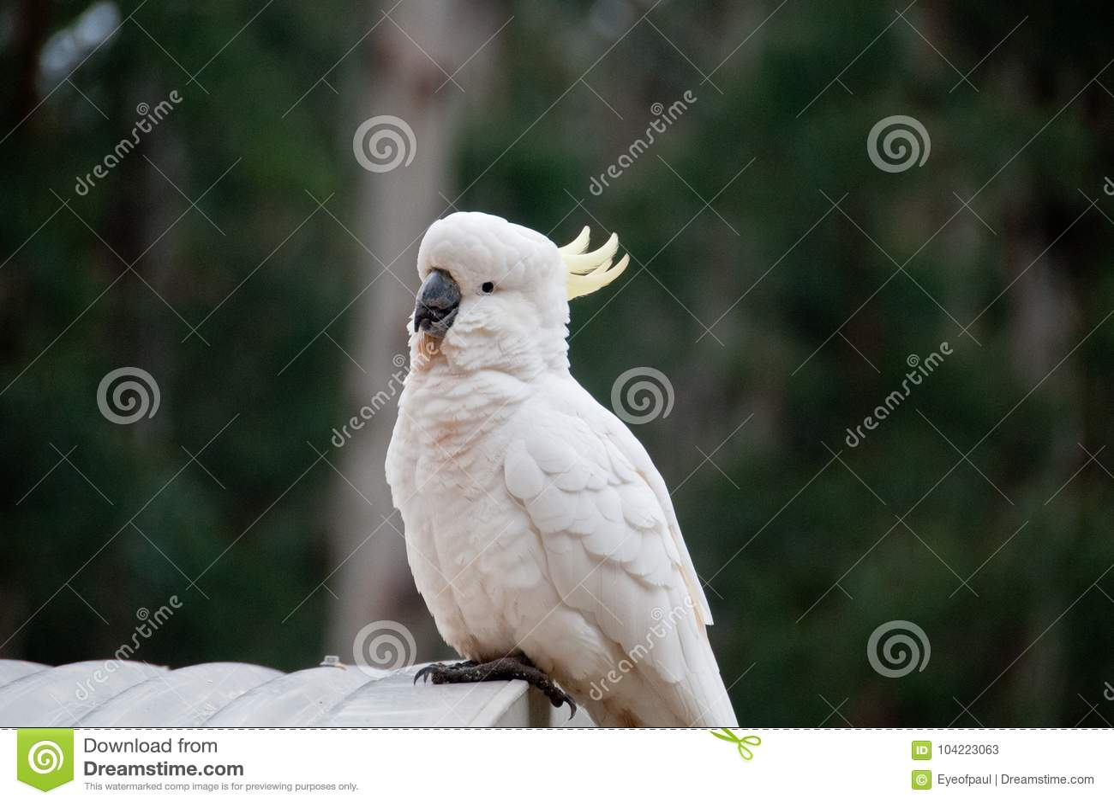 Άνθρωπος με μεγάλο πουλί