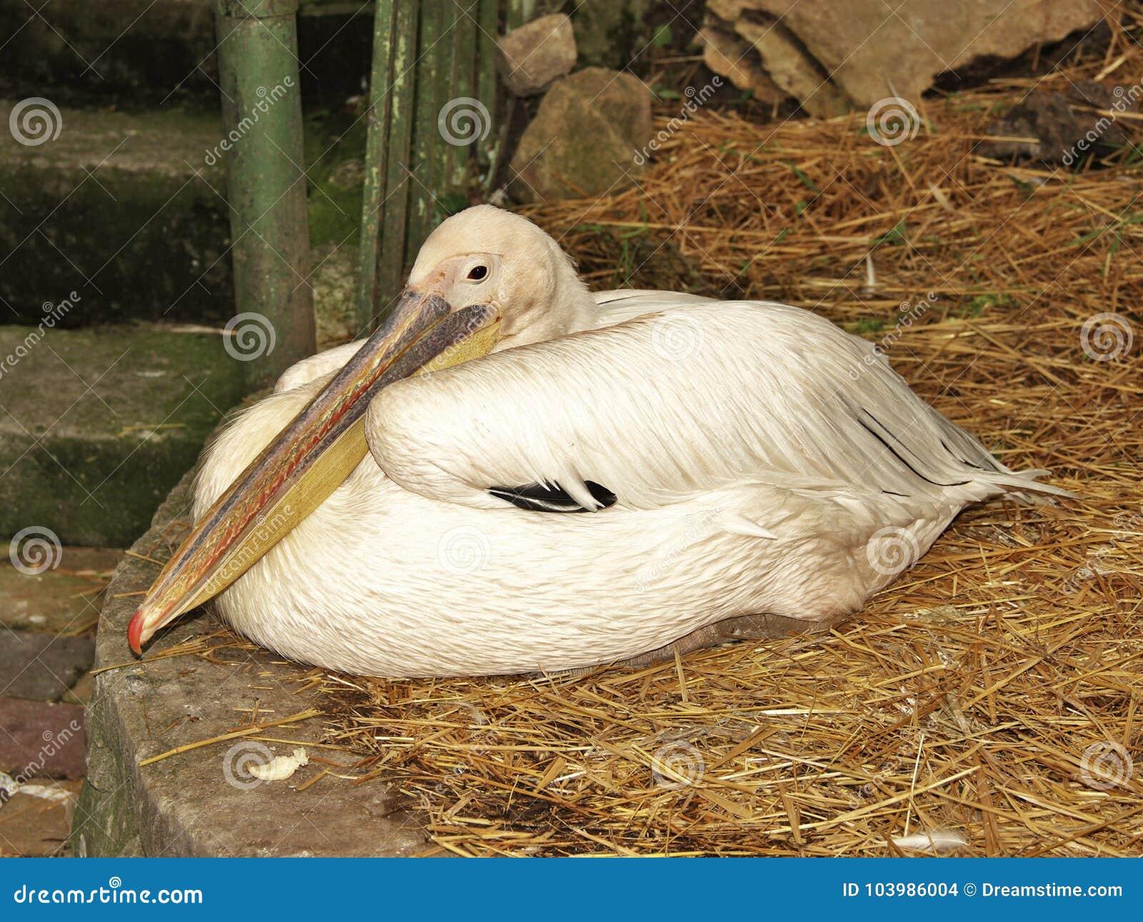 Ελεύθερα μακρύ πουλί