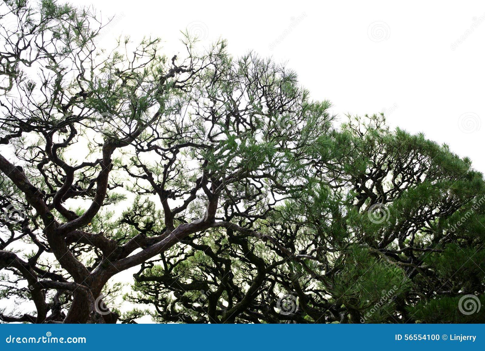 Download Όμορφο ιαπωνικό δέντρο κήπων Στοκ Εικόνες - εικόνα από τουρισμός, χαλαρώστε: 56554100