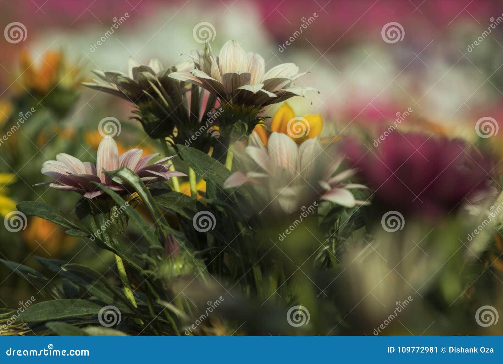 Όμορφο λουλούδι, πράσινο υπόβαθρο θαμπάδων φύλλων