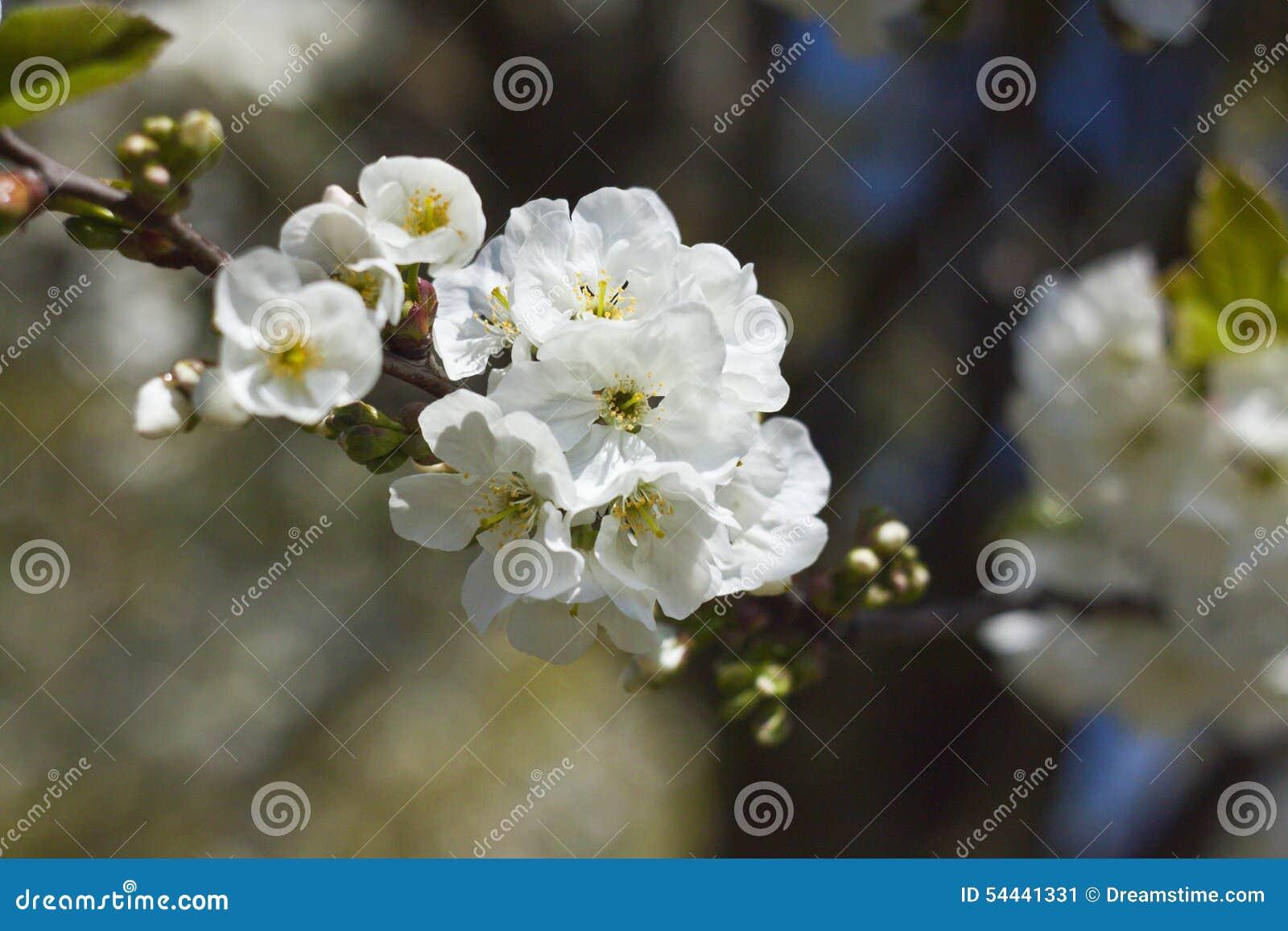 όμορφο λουλούδι