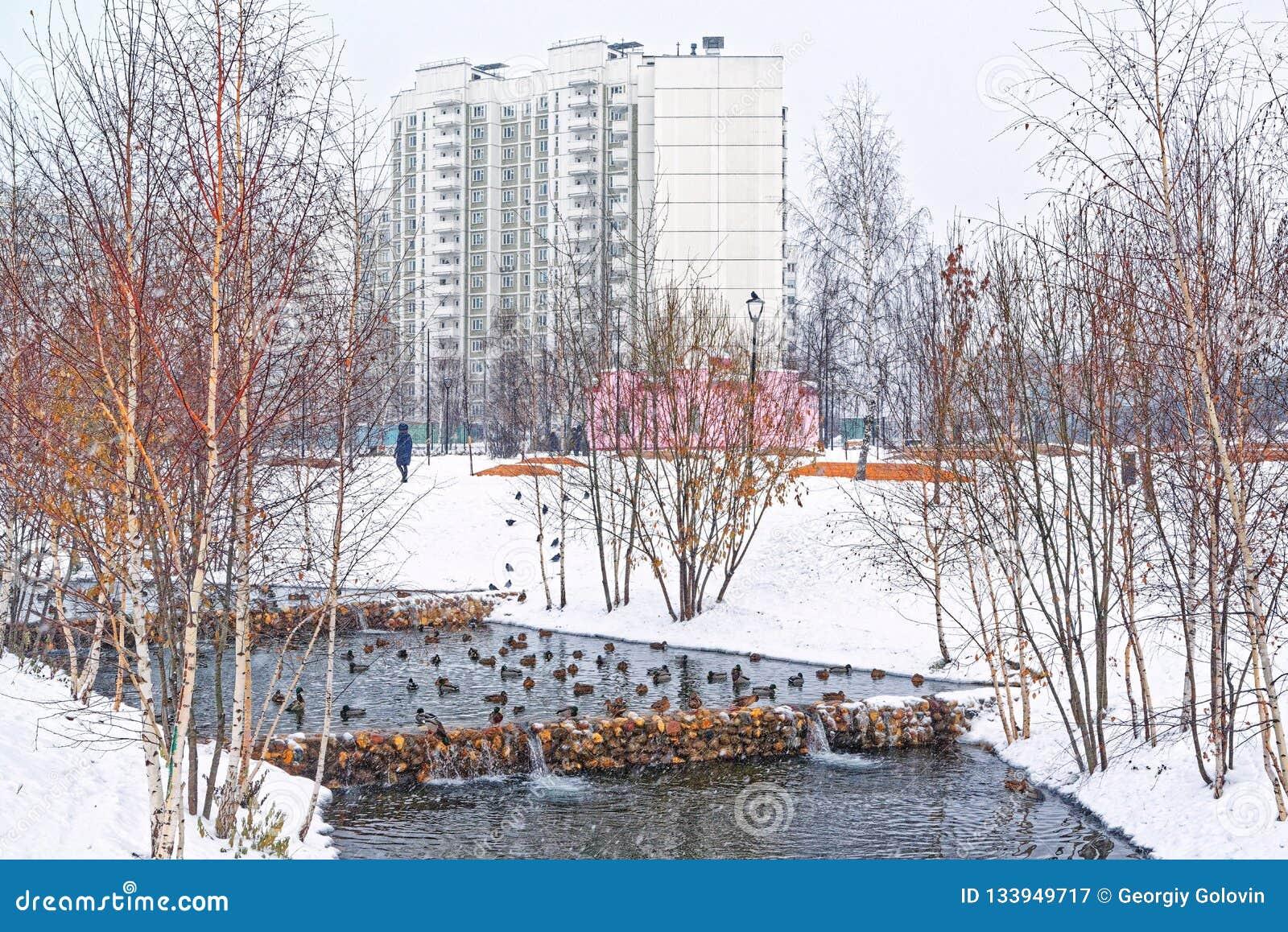 Όμορφο πάρκο πόλεων στα περίχωρα της πόλης Χειμώνας, θλιβεροί ουρανός και ισχυρή χιονόπτωση Οι πάπιες διαχειμάζουν σε ένα ξεπαγωμ
