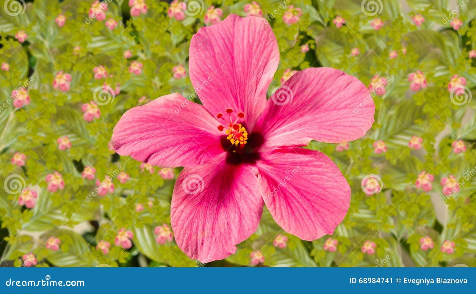 όμορφο ροζ λουλουδιών