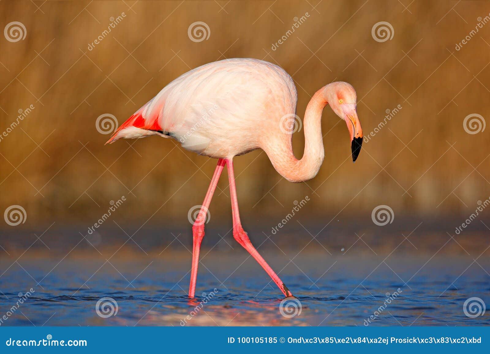 ηλικιωμένες μεγάλο πουλί δωρεάν πορνό κλιπ μεγάλες πούτσες