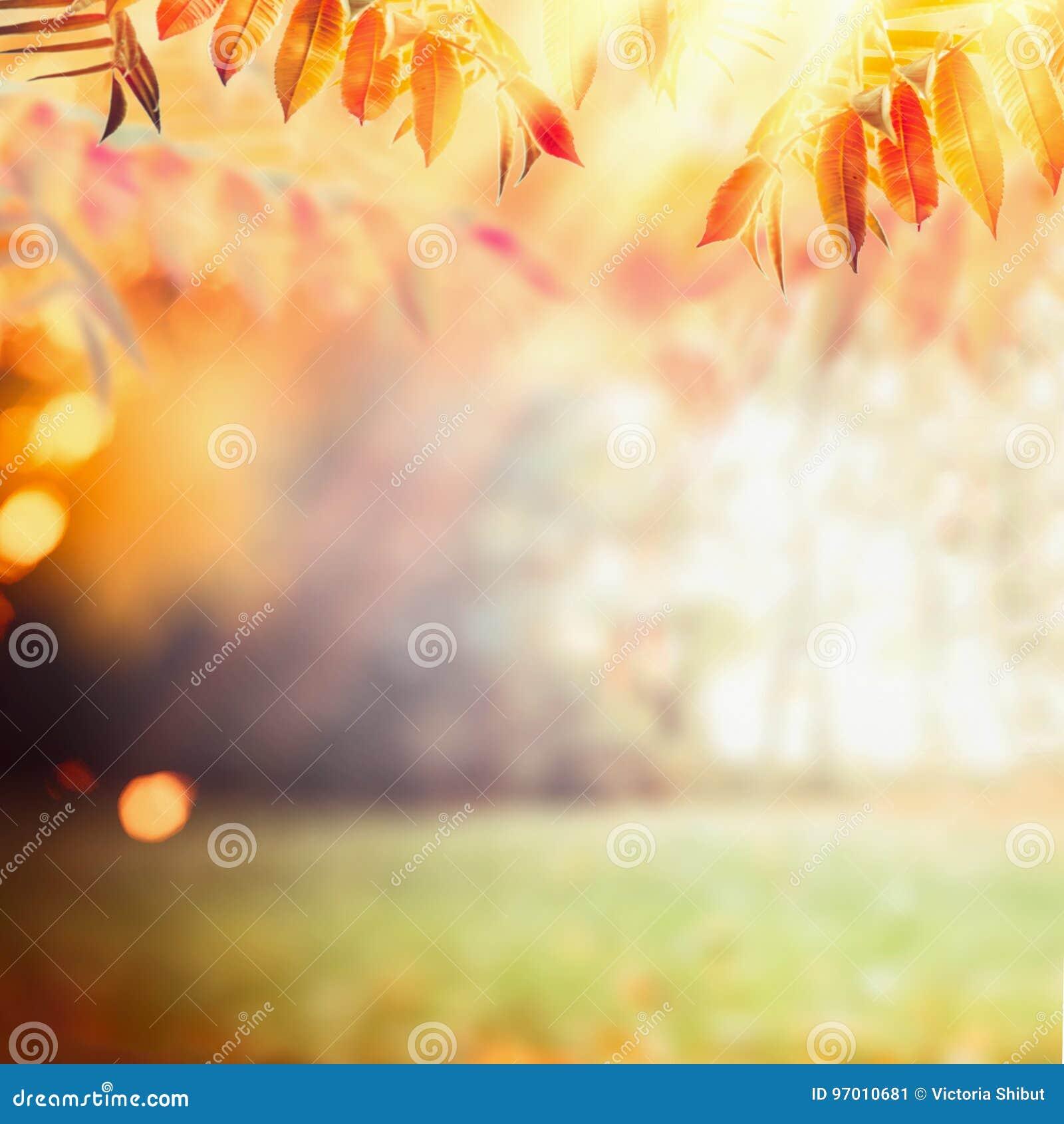 Όμορφο υπόβαθρο φθινοπώρου με το ζωηρόχρωμο φύλλωμα πτώσης στο υπόβαθρο ηλιαχτίδων Υπαίθρια φύση πτώσης