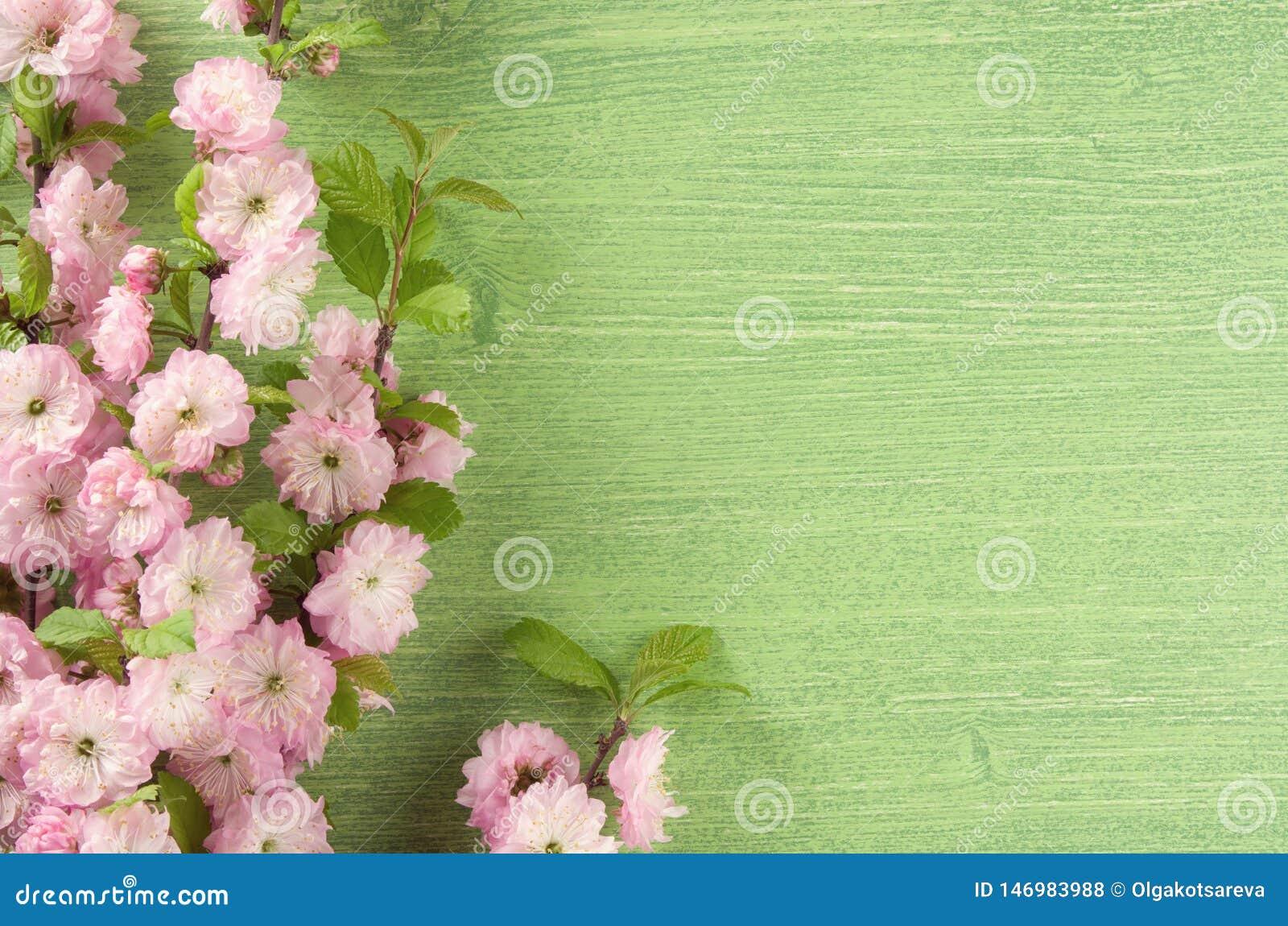 Όμορφο floral υπόβαθρο άνοιξη Ρόδινο λουλούδι αμυγδάλων στον κλάδο και φύλλα στο πράσινο ξύλινο επιτραπέζιο υπόβαθρο r