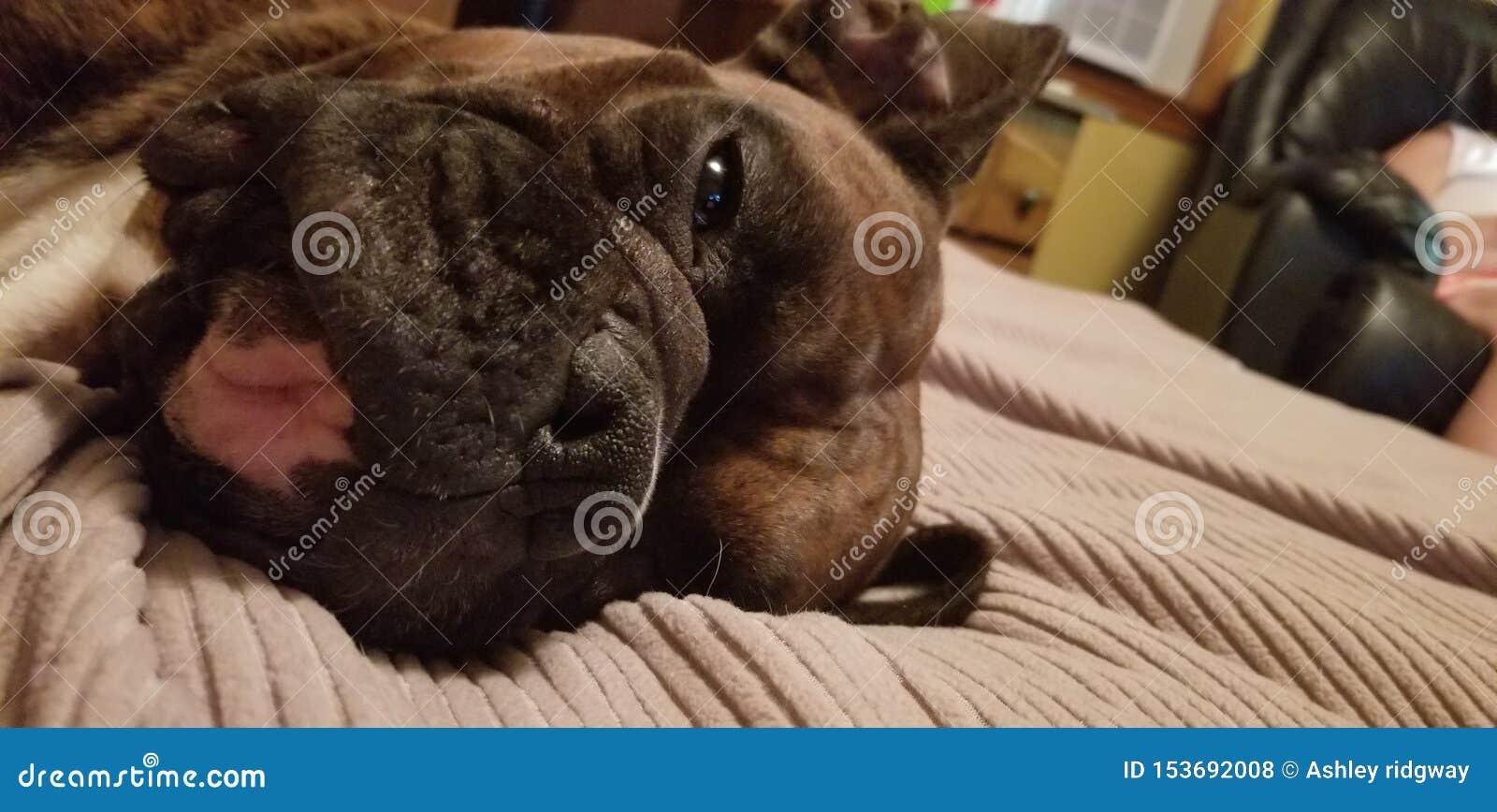 Όνειρα σκυλακιών της χάραξης των γατών και των yummy απολαύσεων