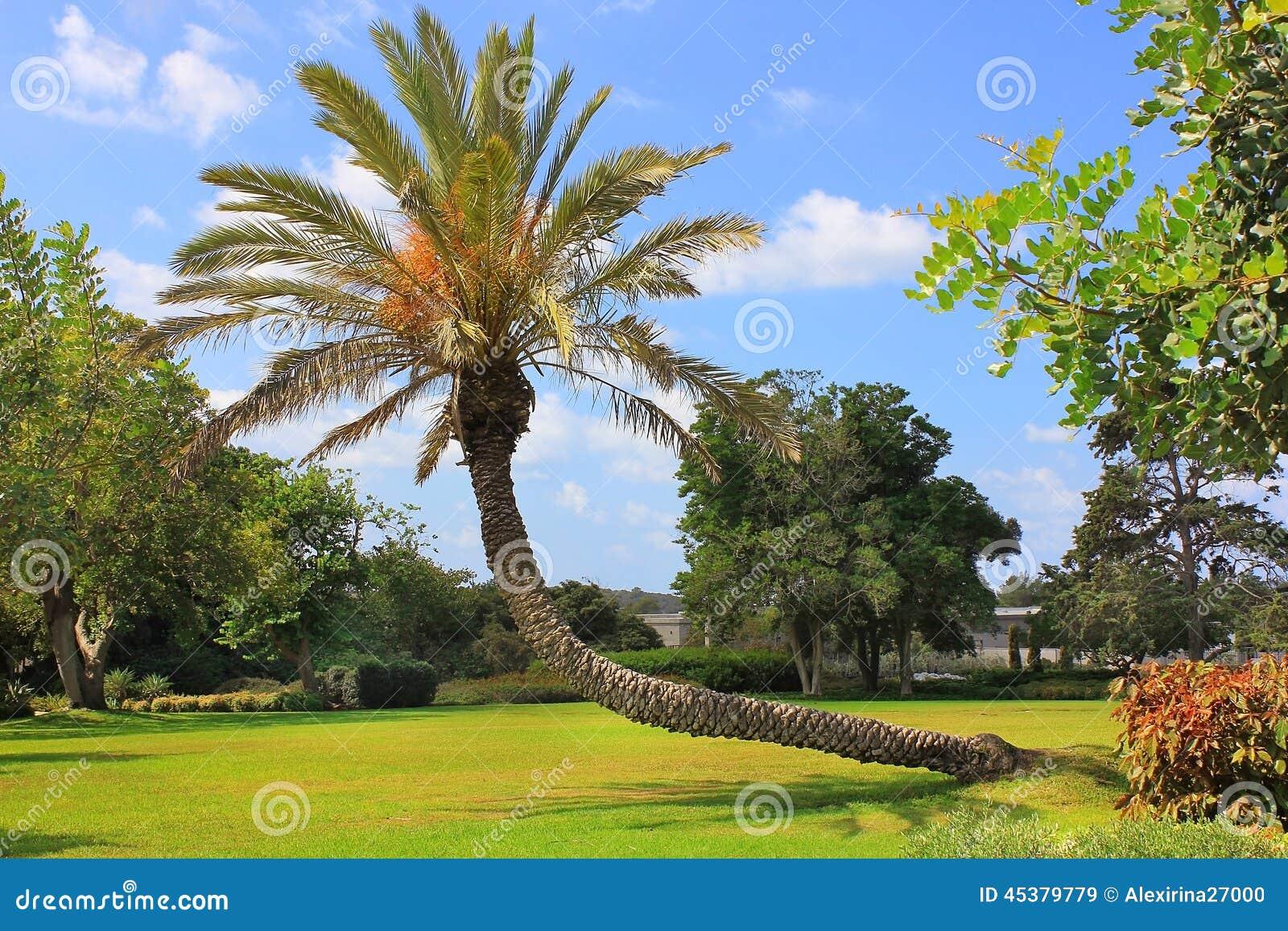 Όπου θαμμένος βαρώνος Edmond de Rothschild, Ισραήλ
